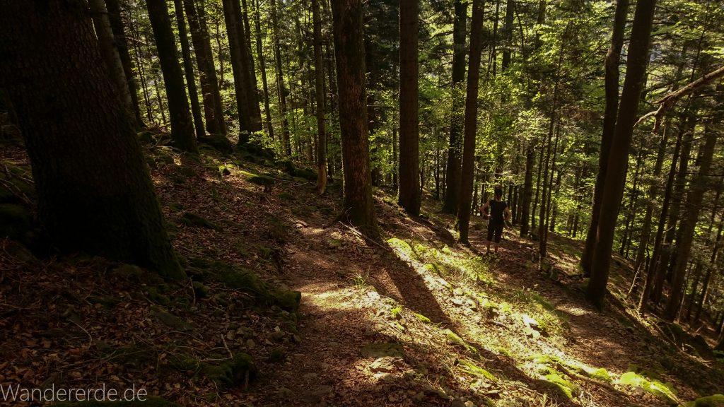 Wanderweg Wildbachtour im Schwarzwald, schmaler Naturpfad