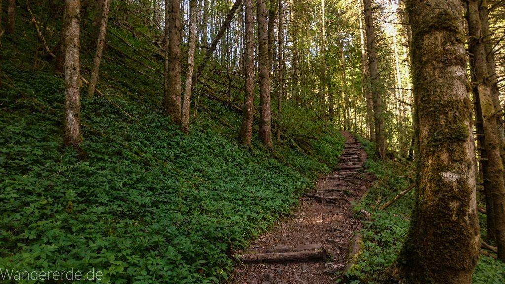 Wutachschlucht Wanderung Wutachmühle zur Schattenmühle, schöner Wald, naturbelassener Waldweg, schmaler naturbelassener Pfad, viele Bäume, Fluß Wutach, kühlender Schatten