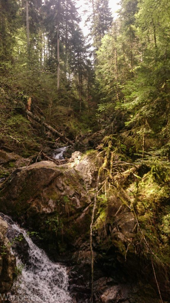 Lotenbachklamm bei der Schattenmühle, in der Klamm umgestürzter Baum, Wasser, riesige Steine, Wald, Laubwald