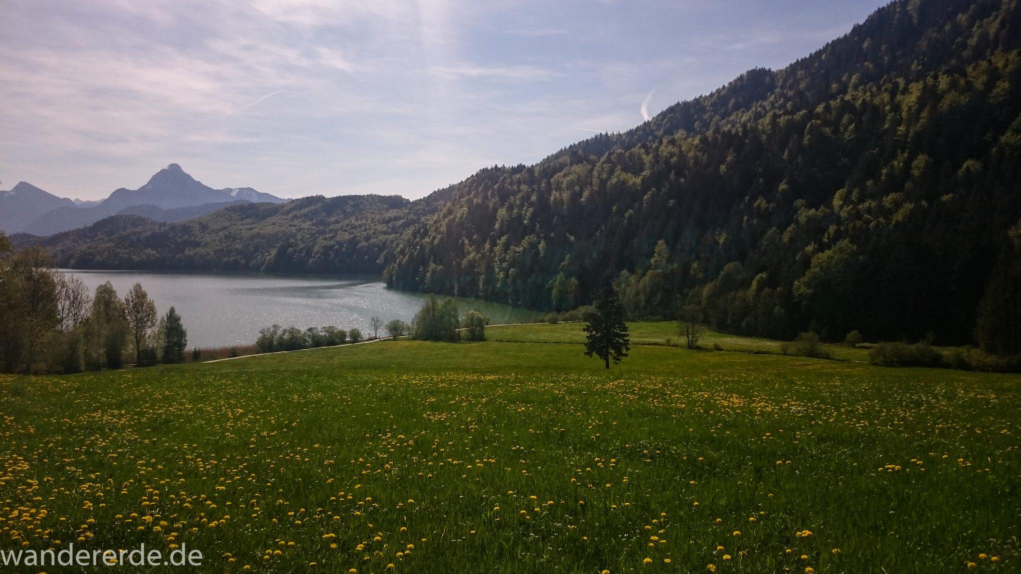 Ufer des Weissensee, Baum im schönen Wald und saftig grüne blühende Wiesen, blauer strahlender Himmel