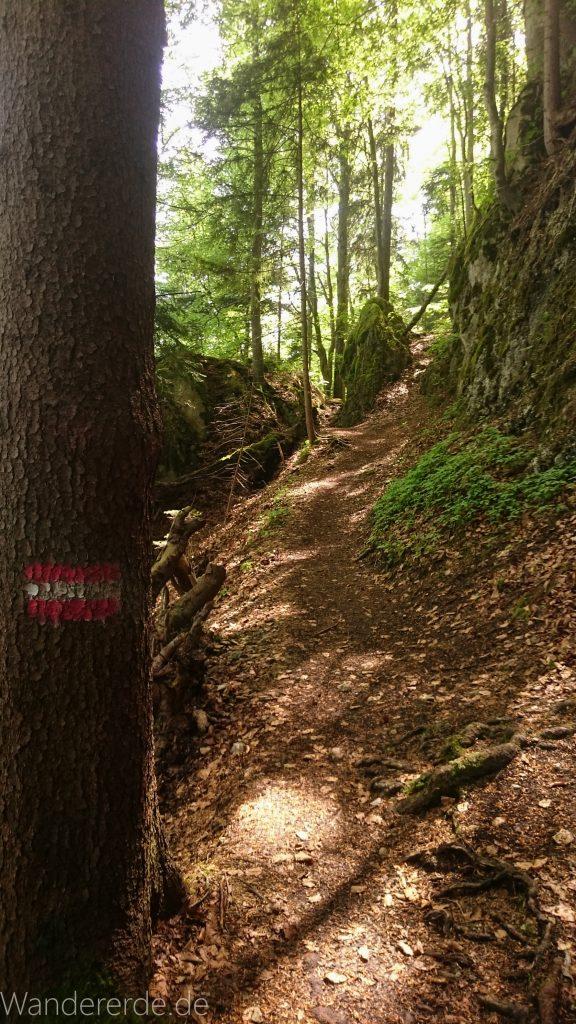 Weissensee Wanderweg zum Alatsee schmaler ursprünglicher naturnaher Pfad Bäume kühlender Schatten Weg Markierung