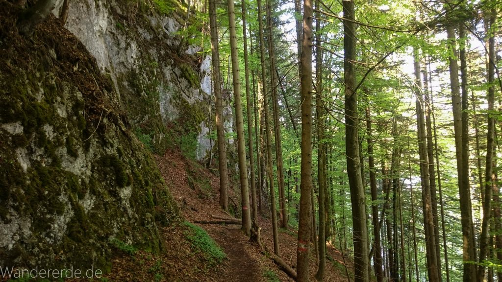 Weissensee Wanderweg zum Alatsee schmaler ursprünglicher naturnaher Pfad Bäume kühlender Schatten Steilhang über Ufer