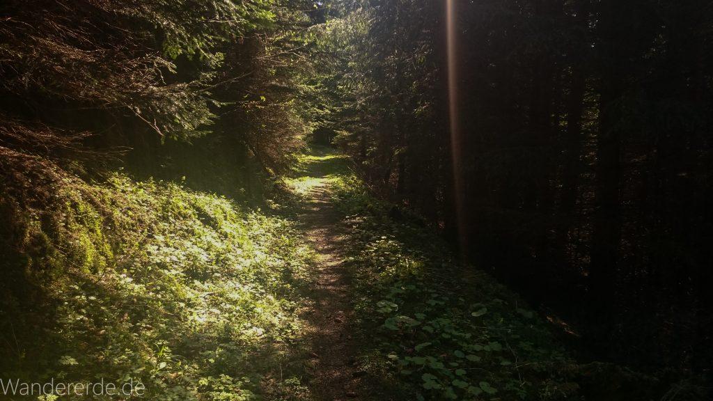 Wandern beim Tegelberg, Tegelbergkopf Wanderung bei Stadt Füssen – Parkplatz Drehhütte bis Rohrkopfhütte Nadelbaum schmaler Pfad durch Wald naturbelassener steiler Weg Stein und Stock, Sonne zaubert schönes Licht