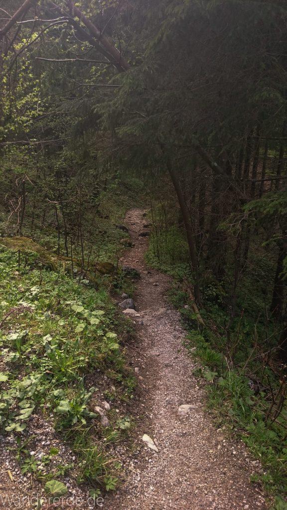 Tegelbergkopf Wanderung bei Stadt Füssen – Parkplatz Drehhütte bis Rohrkopfhütte Nadelbaum schmaler Pfad durch Wald naturbelassener steiler Weg Stein und Stock