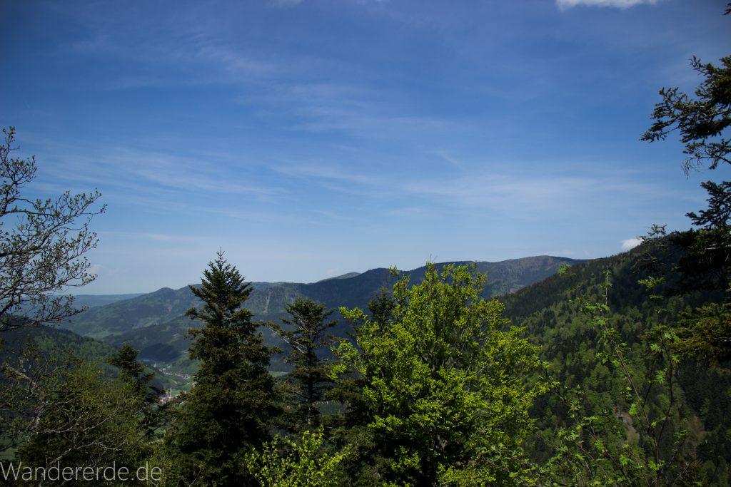 Wanderweg Wildbachtour im Schwarzwald, schöne Aussicht, blauer Himmel, ringsum Wald