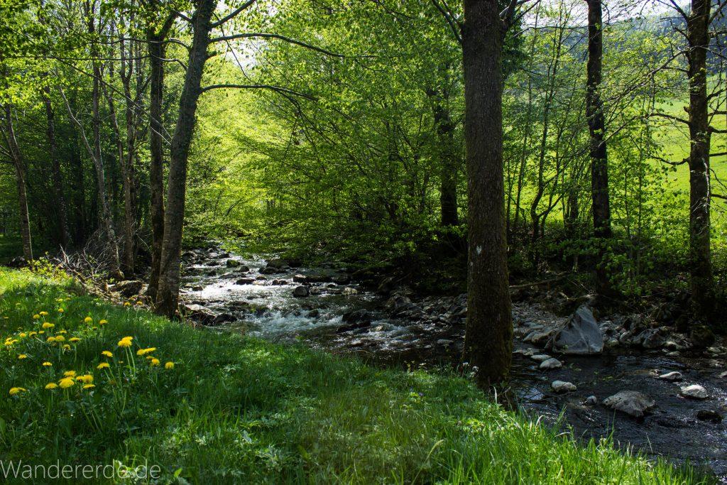 Wanderweg Wildbachtour im Schwarzwald, saftige sattgrüne blühende Wiese am Fluß