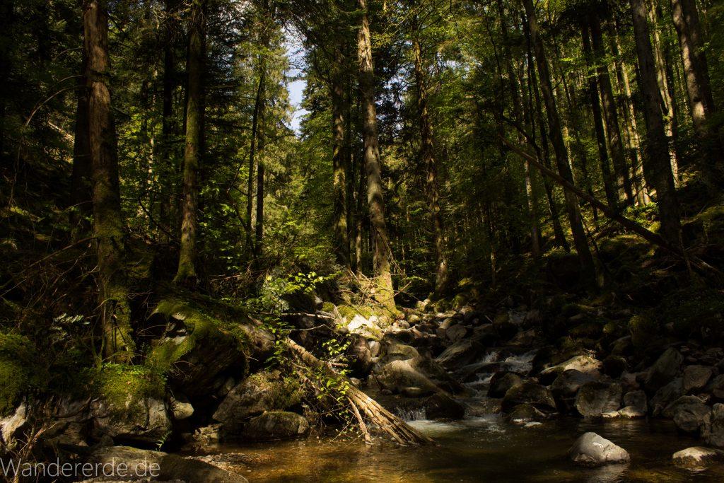 Wanderweg Wildbachtour im Schwarzwald, schmaler Naturpfad durch schönes Tal, dichter Wald