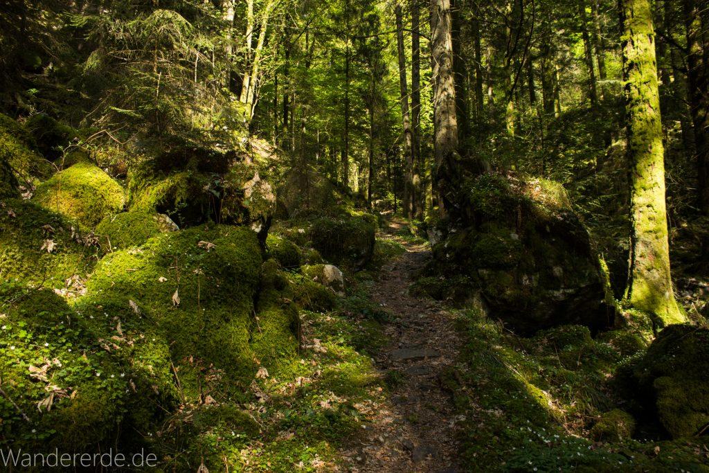 Wanderweg Wildbachtour im Schwarzwald, schmaler Naturpfad durch schönen Wald