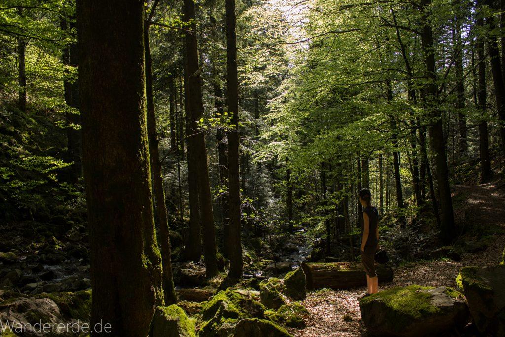 Wanderweg Wildbachtour im Schwarzwald, schmaler Naturpfad durch schönes Tal
