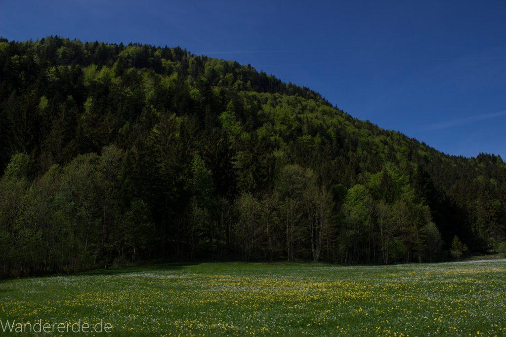 schöner Wald und saftig grüne Wiesen blauer Himmel strahlend blühend Sonne scheint warmer Frühlingstag