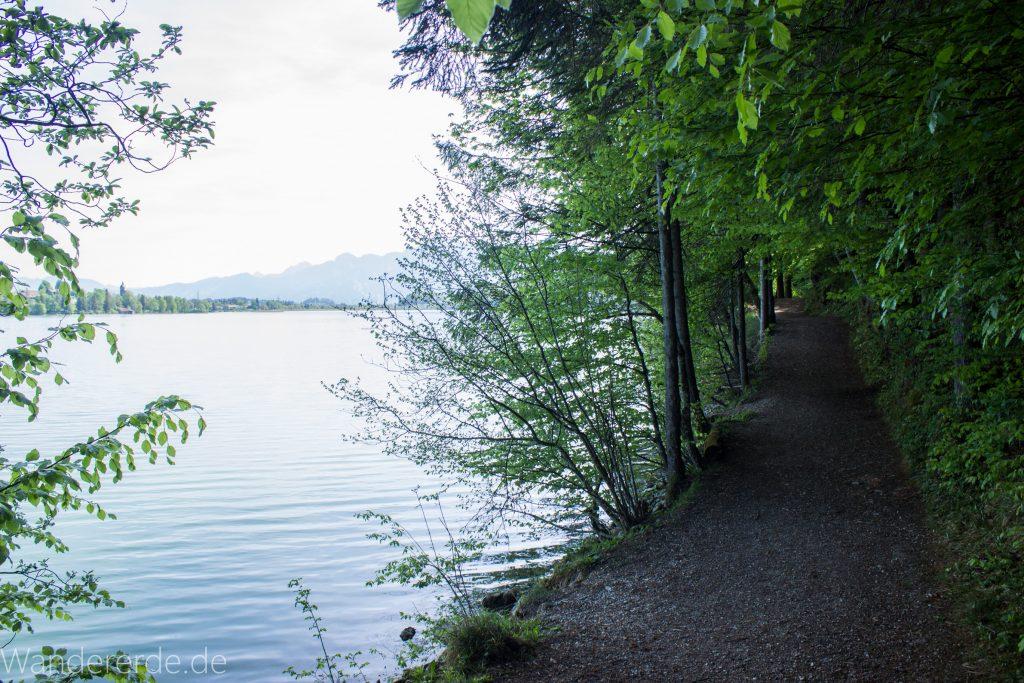 Alatsee Ufer blauer Himmel strahlend klares Wasser Berge in der Ferne saftige grüne Bäume am Uferrand schöner naturbelassener Weg kühlender Schatten Sonne