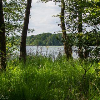Rundweg Gördensee Havelland Brandenburg an der Havel, schöner Wald mit vielen Bäumen Schatten spendend weicher Waldboden Weg um Gördensee