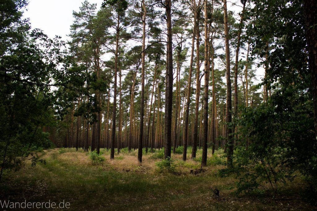 Rundweg Gördensee Havelland Brandenburg an der Havel, Wald mit Bäumen weicher Waldboden Weg um Gördensee