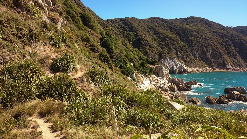 Wanderung Abel Tasman Coast Track Great Walk Südinsel Neuseeland, Wanderweg entlang traumhafter Küste im Abel Tasman Nationalpark, in der Ferne Aussicht auf traumhafte, sichelförmige Bucht mit blaugrünem klarem frischem Wasser und dichtem grünem Wald, Sonnenschein, Palmen und Farne, goldener Sandstrand
