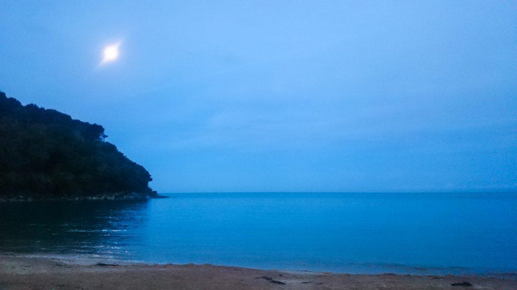 Wanderung Abel Tasman Coast Track Great Walk Südinsel Neuseeland, Aussicht auf traumhafte, sichelförmige Bucht mit blaugrünem klarem frischem Wasser und dichtem grünem Wald, Sonnenschein, Palmen und Farne, goldener Sandstrand, wunderschönes Licht zur Dämmerung