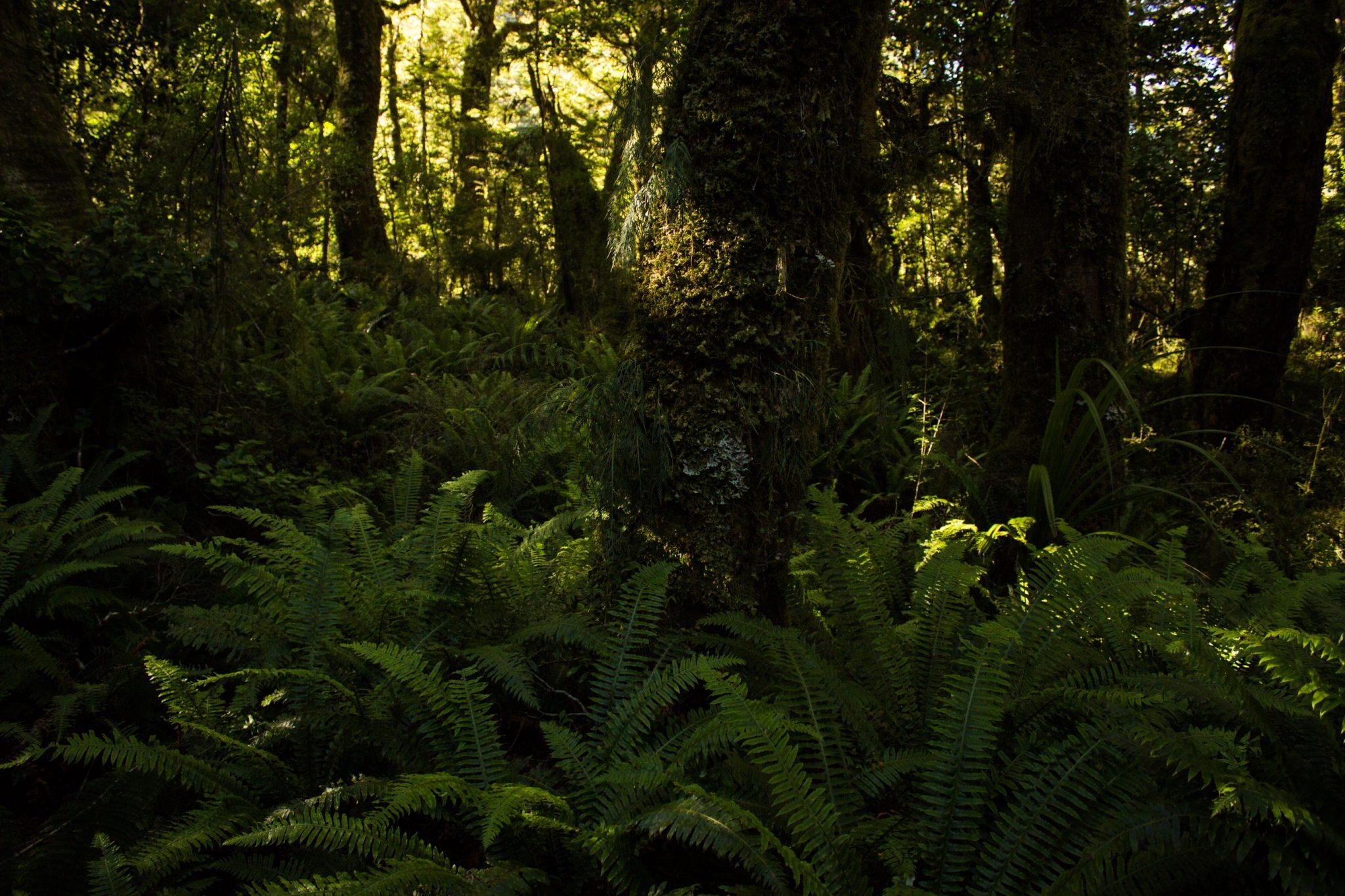 Lake Marian Track wandern, bei Marian Falls im Fiordland National Park Südinsel Neuseelands, dichter saftig grüner Wald, Farne, Wanderung zum See Marian
