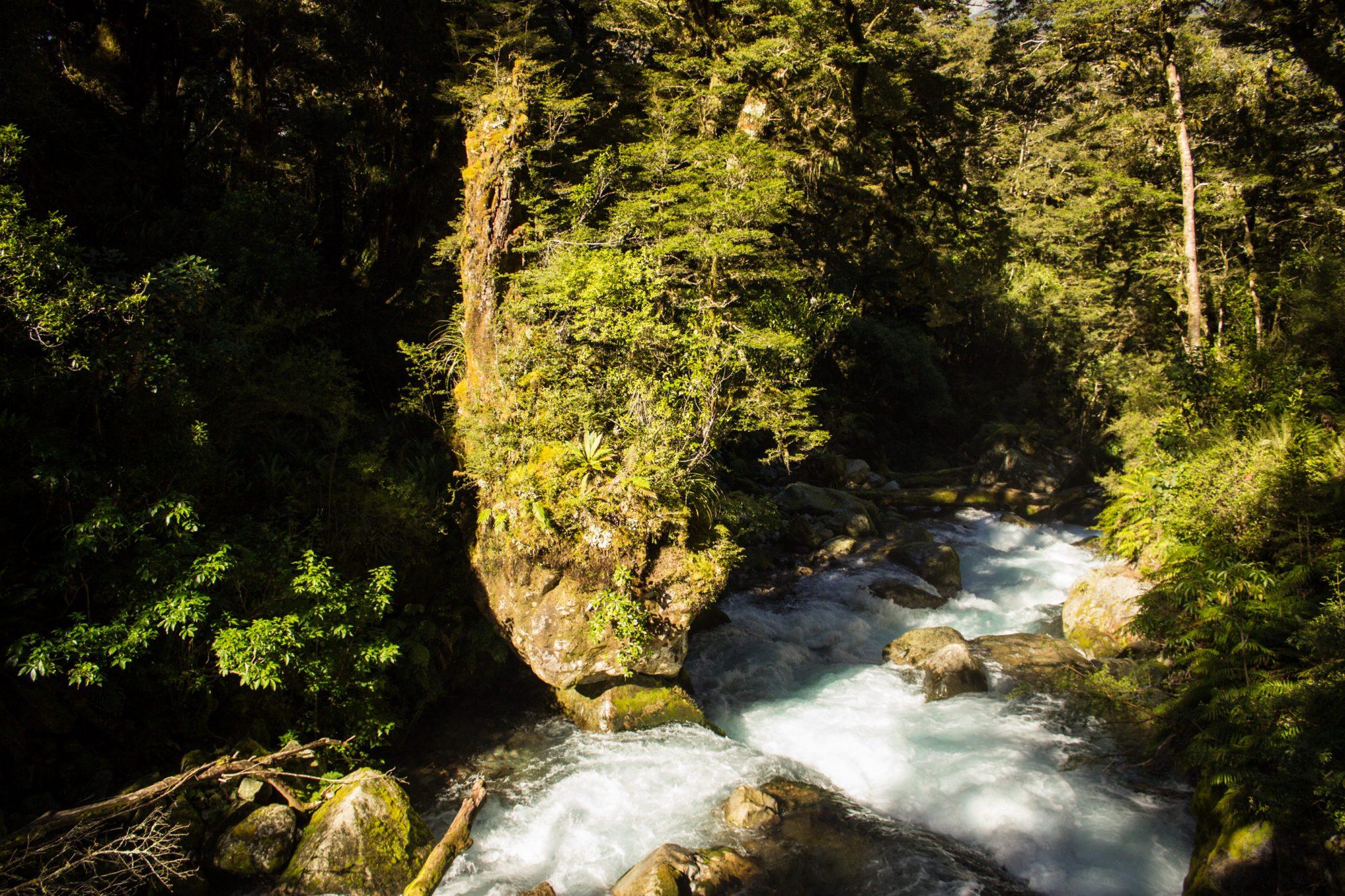 Lake Marian Track wandern, bei Marian Falls im Fiordland National Park Südinsel Neuseelands,dichter saftig grüner Wald, Farne, Wanderung zum See Marian, Wasserfall Marian Falls, schönes Licht, Sonne, Steine, großer Felsen, Moos