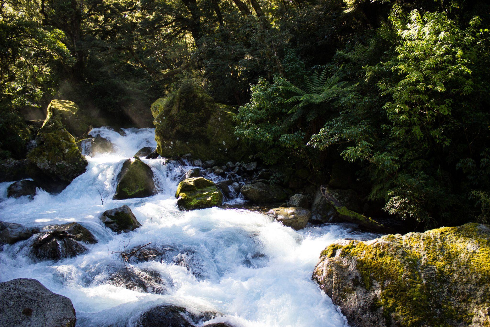 Lake Marian Track wandern, bei Marian Falls im Fiordland National Park Südinsel Neuseelands, dichter saftig grüner Wald, Farne, Wanderung zum See Marian, Wasserfall Marian Falls, schönes Licht, Sonne, Steine