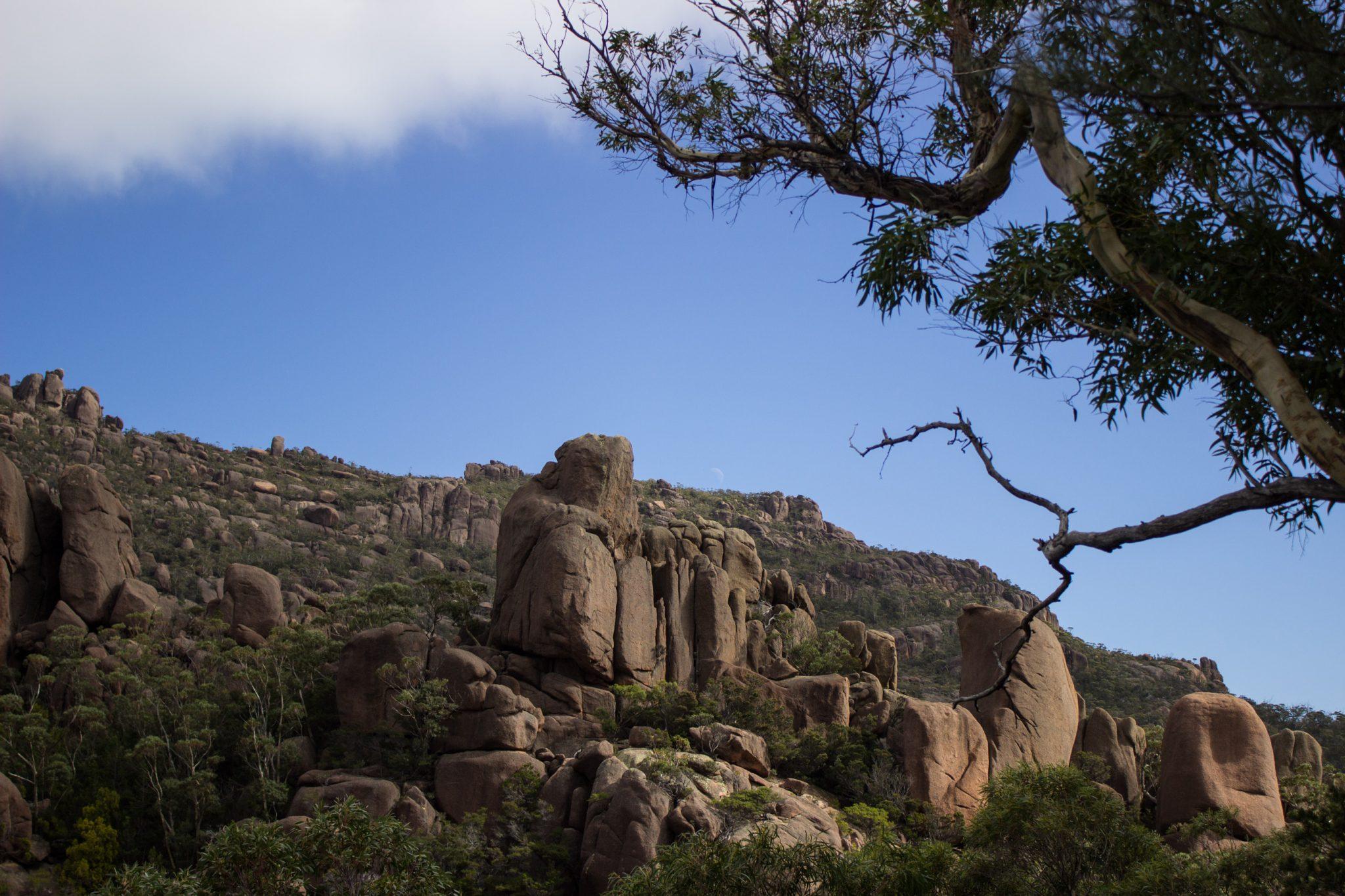 traumhafter Freycinet Nationalpark in Tasmanien, riesige Steine, Klumpen übereinander, Baum