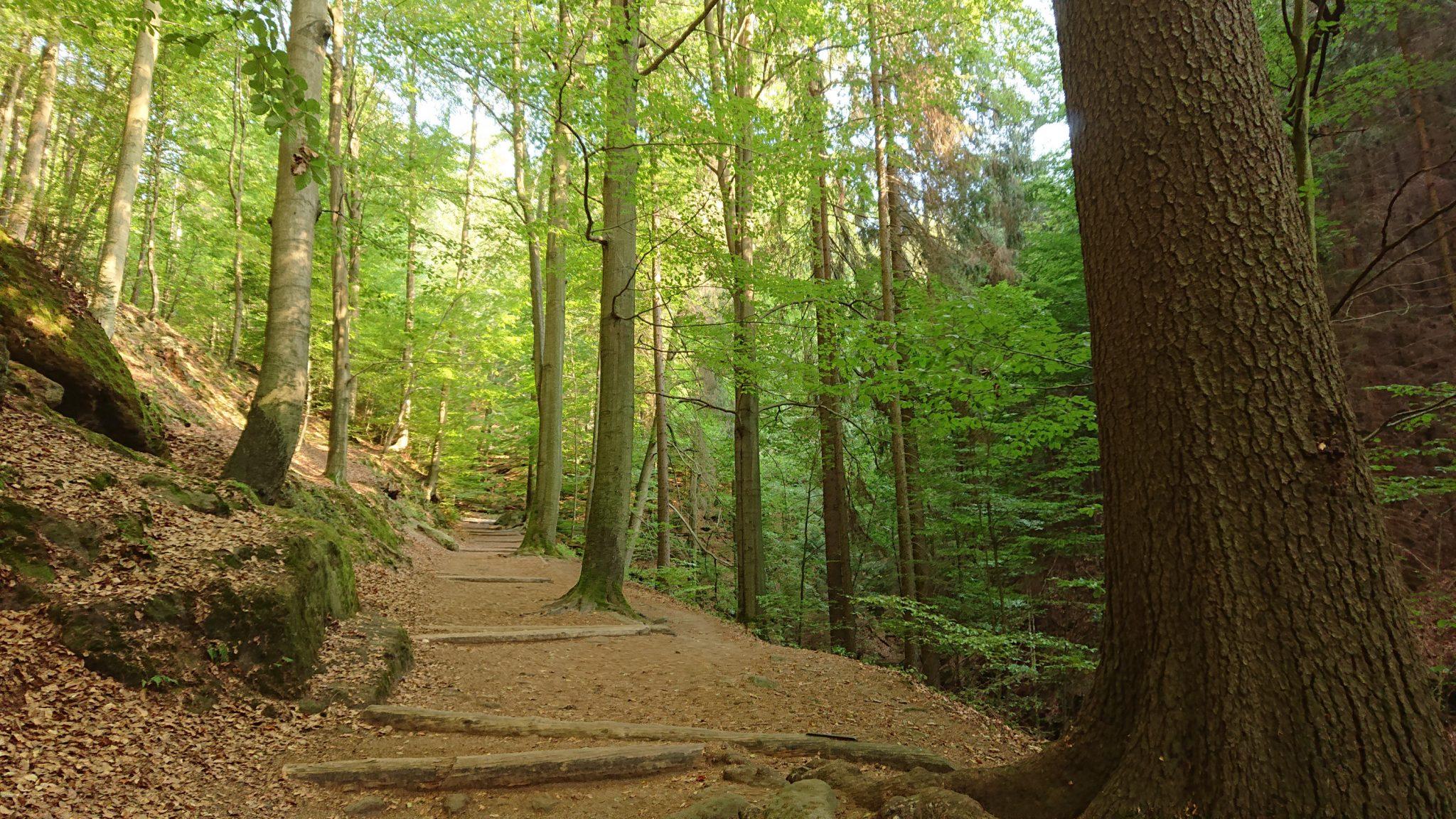 Wanderung zum Kuhstall im Kirnitzschtal, Wanderweg in der sächsischen Schweiz zum beliebten Ausflugsziel Kuhstall, schöner Wald, am späten Nachmittag wenige Leute unterwegs