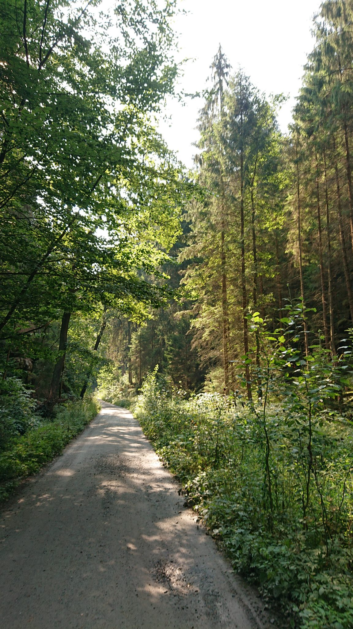 Zeughaus Hickelhöhle und Großer Reitsteig - im Kirnitzschtal wandern, Wanderweg im Wanderparadies Sächsische Schweiz mit vielen tollen Aussichten, riesiger Felsennationalpark, breiterer Wegabschnitt beim großen Zschand