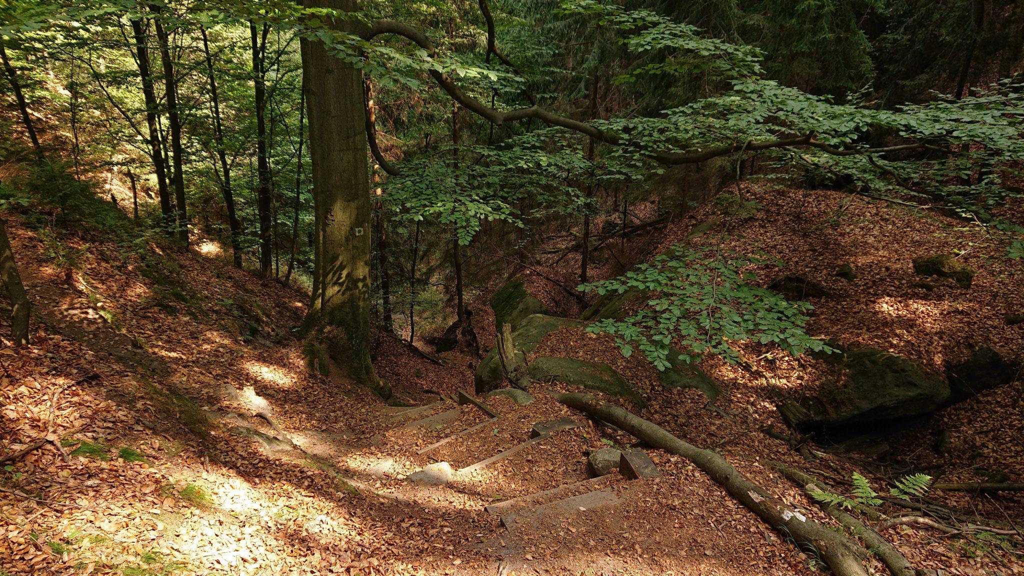 Zeughaus Roß- und Goldsteig Richterschlüchte im Kirnitzschtal wandern, Wanderweg im Wanderparadies Sächsische Schweiz mit vielen tollen Aussichten, riesiger Felsennationalpark, Treppenstufen oftmals zu finden