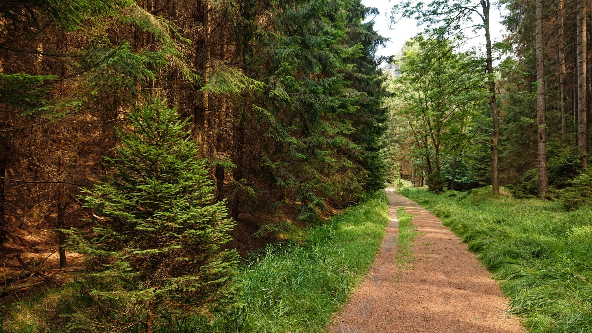 Zeughaus Hickelhöhle und Großer Reitsteig - im Kirnitzschtal wandern, Wanderweg im Wanderparadies Sächsische Schweiz mit vielen tollen Aussichten, riesiger Felsennationalpark, naturbelassener Pfad mit viel Schatten