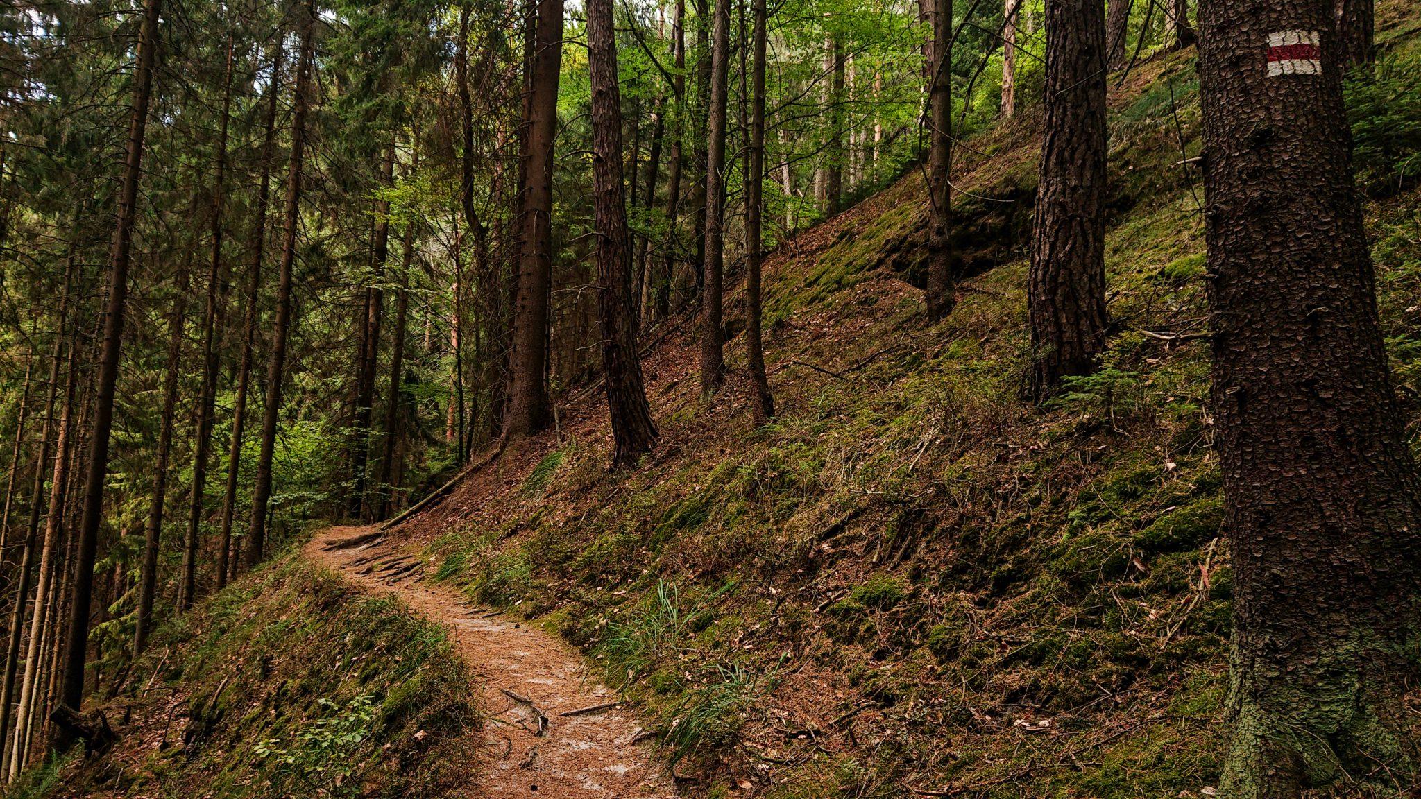 Zeughaus Hickelhöhle und Großer Reitsteig - im Kirnitzschtal wandern, Wanderweg im Wanderparadies Sächsische Schweiz mit vielen tollen Aussichten, riesiger Felsennationalpark, schmaler, abwechslungsreicher Pfad