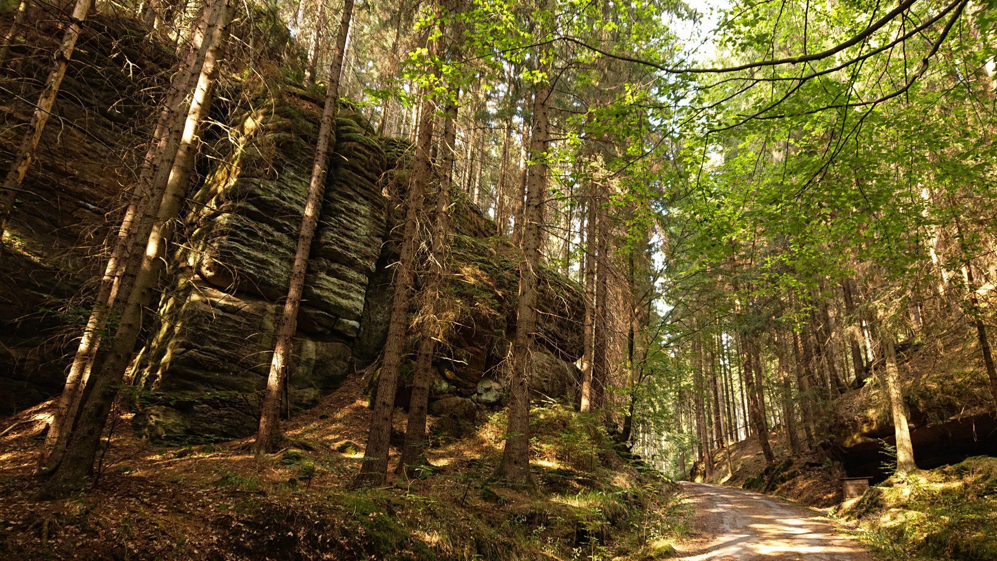 Zeughaus Hickelhöhle und Großer Reitsteig - im Kirnitzschtal wandern, Wanderweg im Wanderparadies Sächsische Schweiz mit vielen tollen Aussichten, riesiger Felsennationalpark, schöne Lichtstimmung im Wald