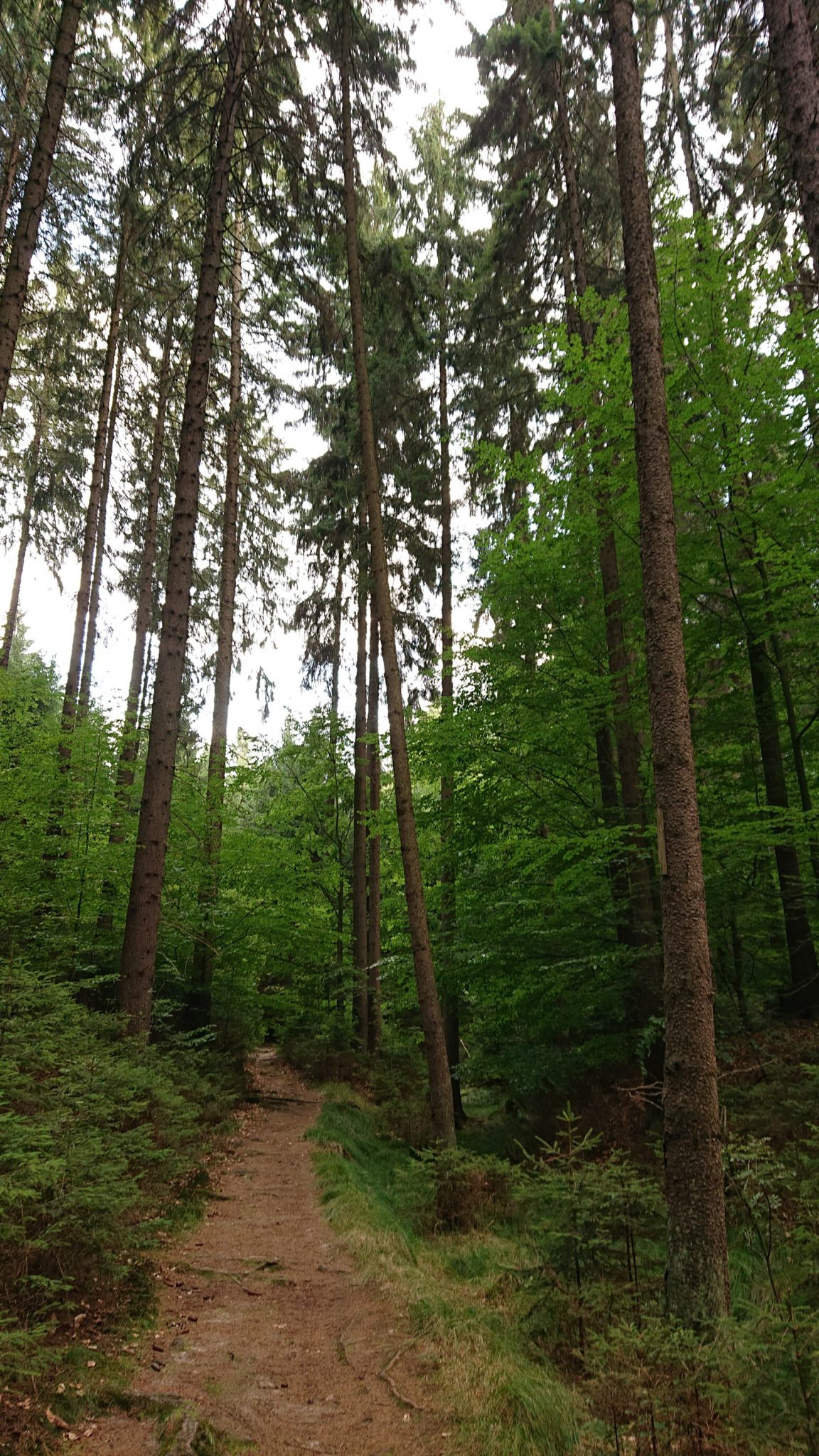 Zeughaus Hickelhöhle und Großer Reitsteig - im Kirnitzschtal wandern, Wanderweg im Wanderparadies Sächsische Schweiz mit vielen tollen Aussichten, riesiger Felsennationalpark, hohe, dünne Bäume