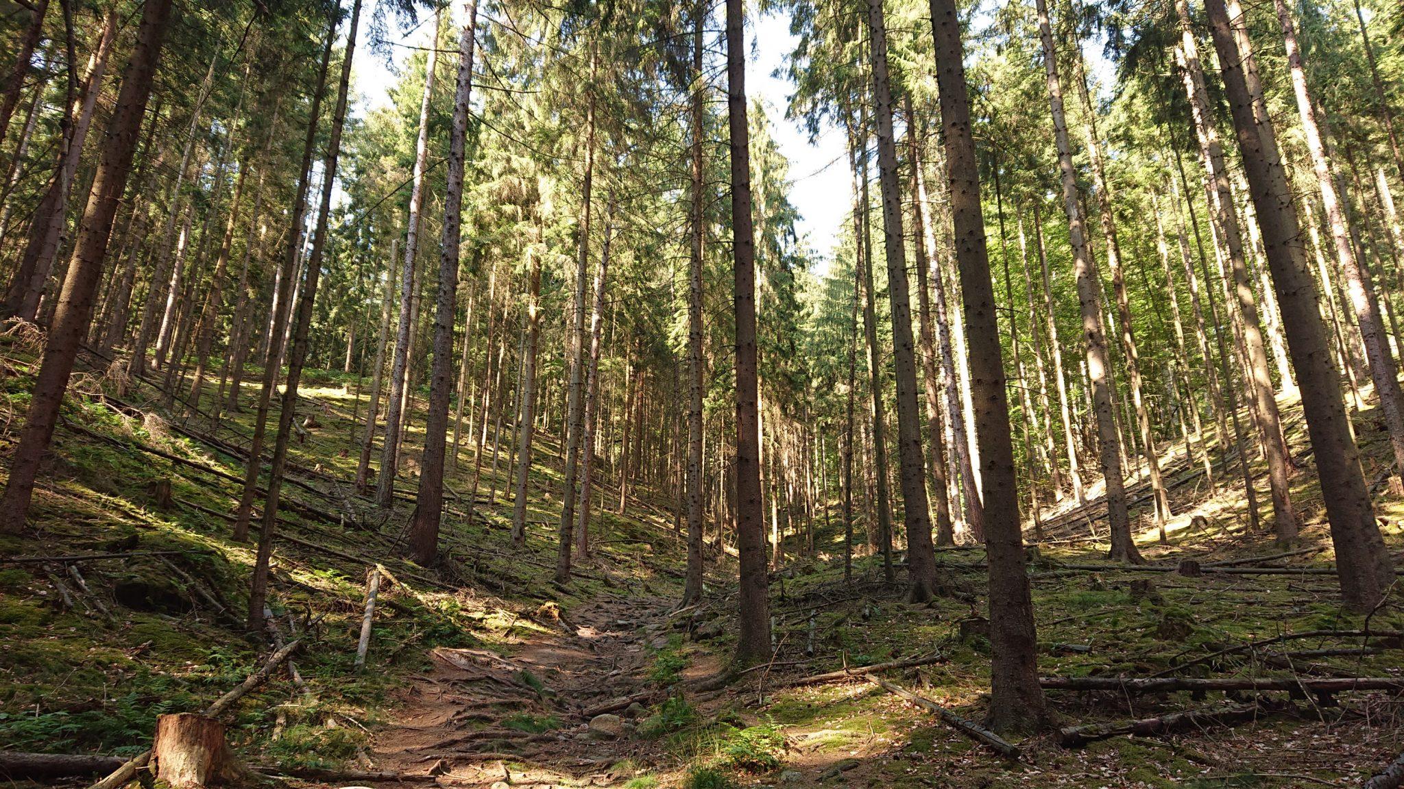 Hohe Liebe Schrammsteine Carolafelsen, Wanderweg im Wanderparadies Sächsische Schweiz mit vielen tollen Aussichten, riesiger Felsennationalpark, viele umgestürzte Bäume