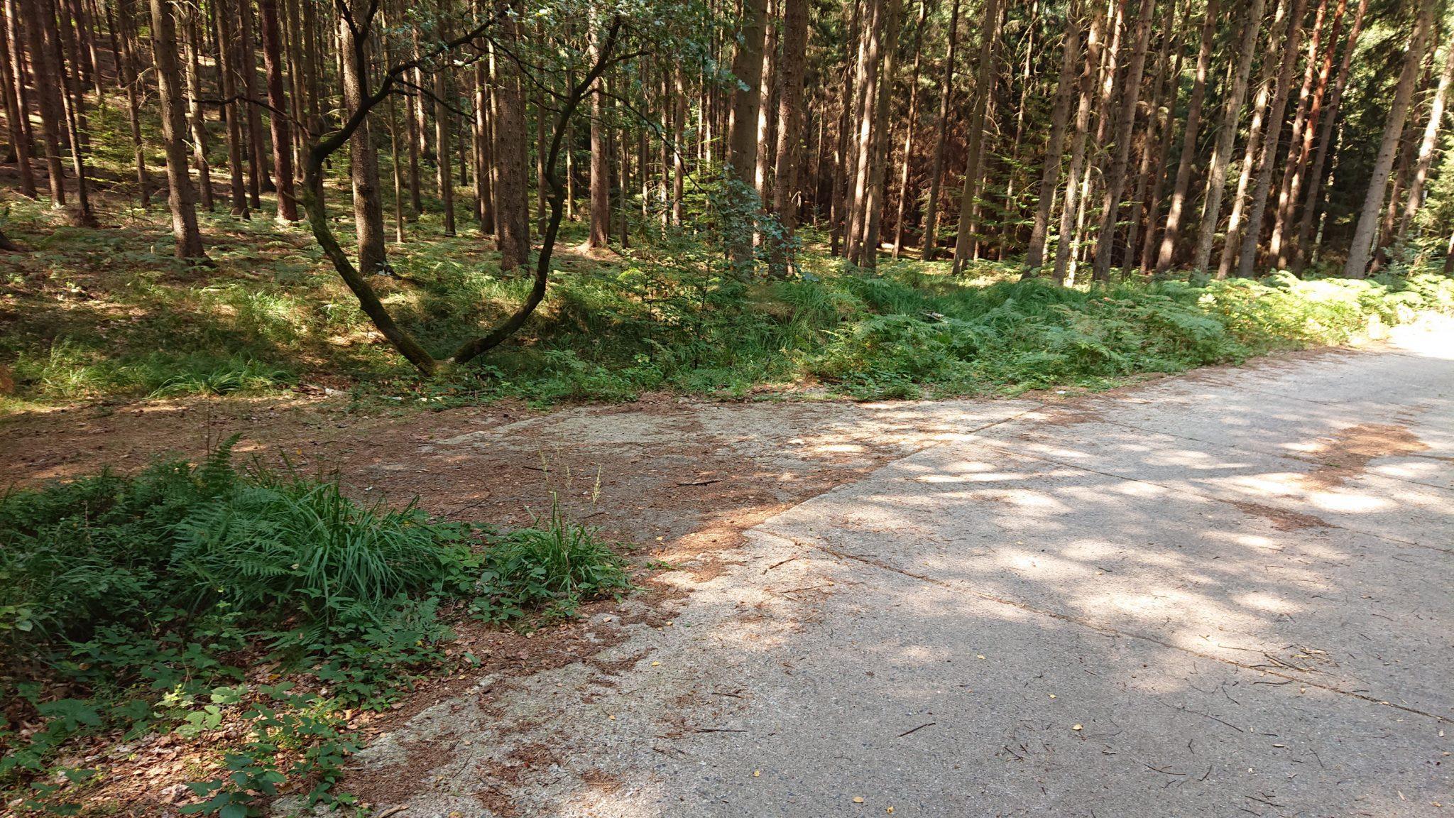 Der erste Pfad der links abgeht vom Hohen Liebenweg (Betonplatten), Hohe Liebe Schrammsteine Carolafelsen, Wanderweg im Wanderparadies Sächsische Schweiz mit vielen tollen Aussichten, riesiger Felsennationalpark