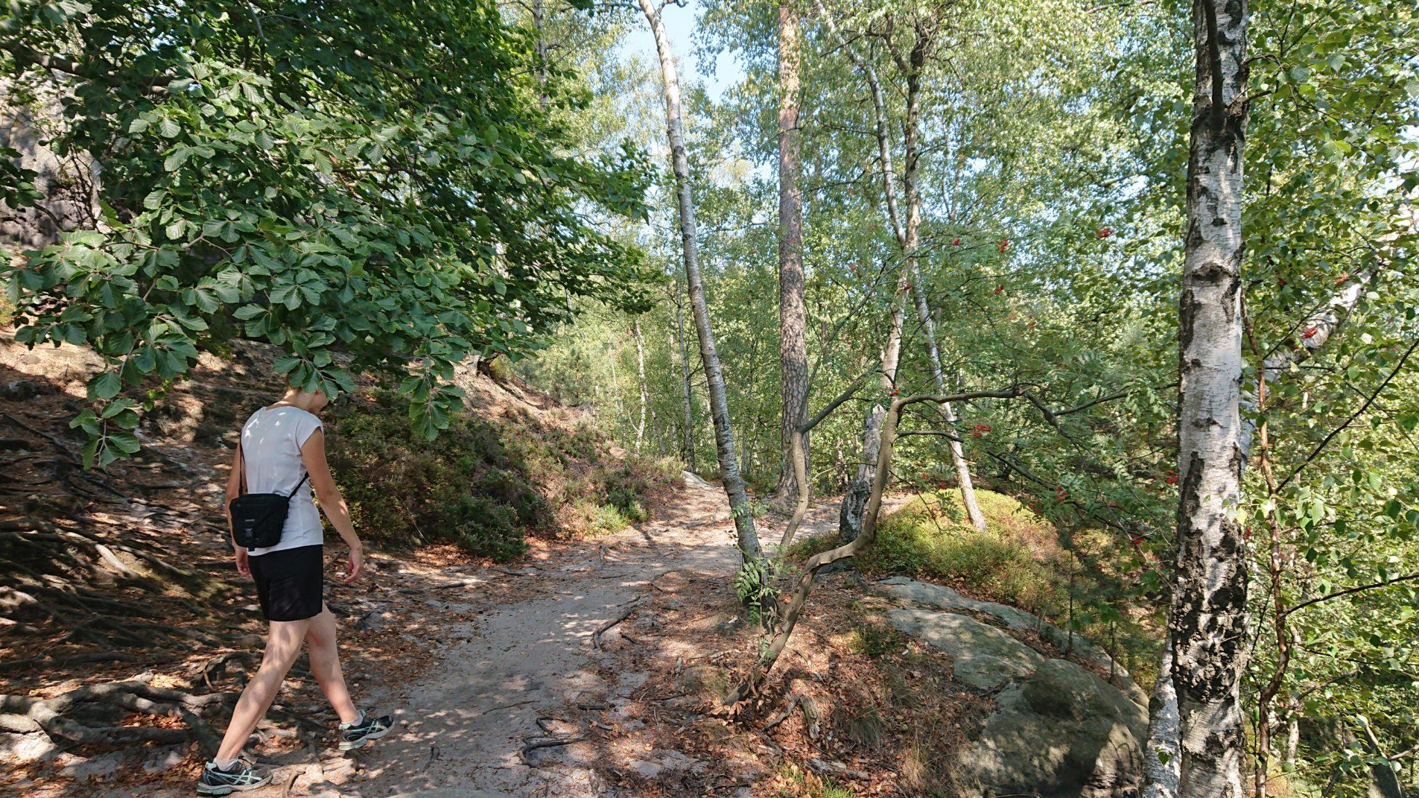 Hohe Liebe Schrammsteine Carolafelsen, Wanderweg im Wanderparadies Sächsische Schweiz mit vielen tollen Aussichten, riesiger Felsennationalpark, bei Hitze viele schattige Abschnitte