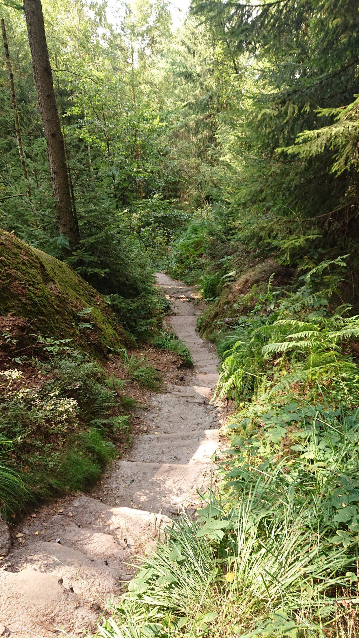 Hohe Liebe Schrammsteine Carolafelsen, Wanderweg im Wanderparadies Sächsische Schweiz mit vielen tollen Aussichten, riesiger Felsennationalpark, schöne Wege