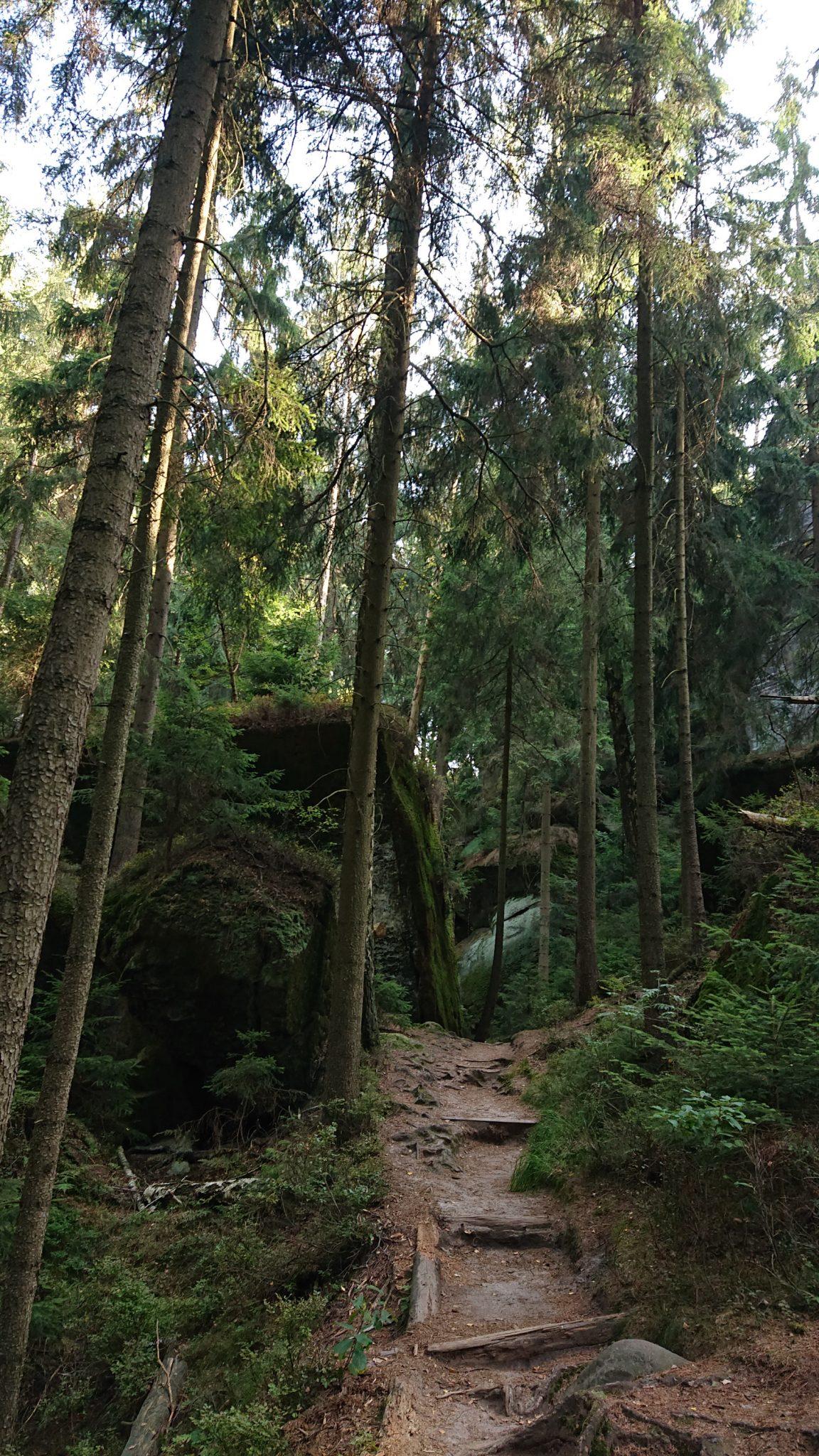 Affensteinweg Frienstein Carolafelsen und Wilde Hölle, Wanderweg im Wanderparadies Sächsische Schweiz mit vielen tollen Aussichten, riesiger Felsennationalpark, schöner Wald