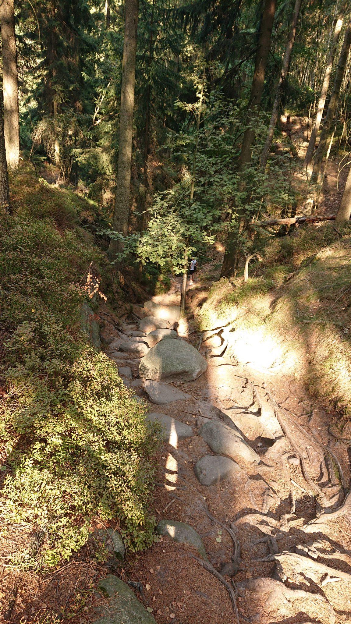 Affensteinweg Frienstein Carolafelsen und Wilde Hölle, Wanderweg im Wanderparadies Sächsische Schweiz mit vielen tollen Aussichten, riesiger Felsennationalpark, schöner Wald, abwechslungsreiche, felsige Wege