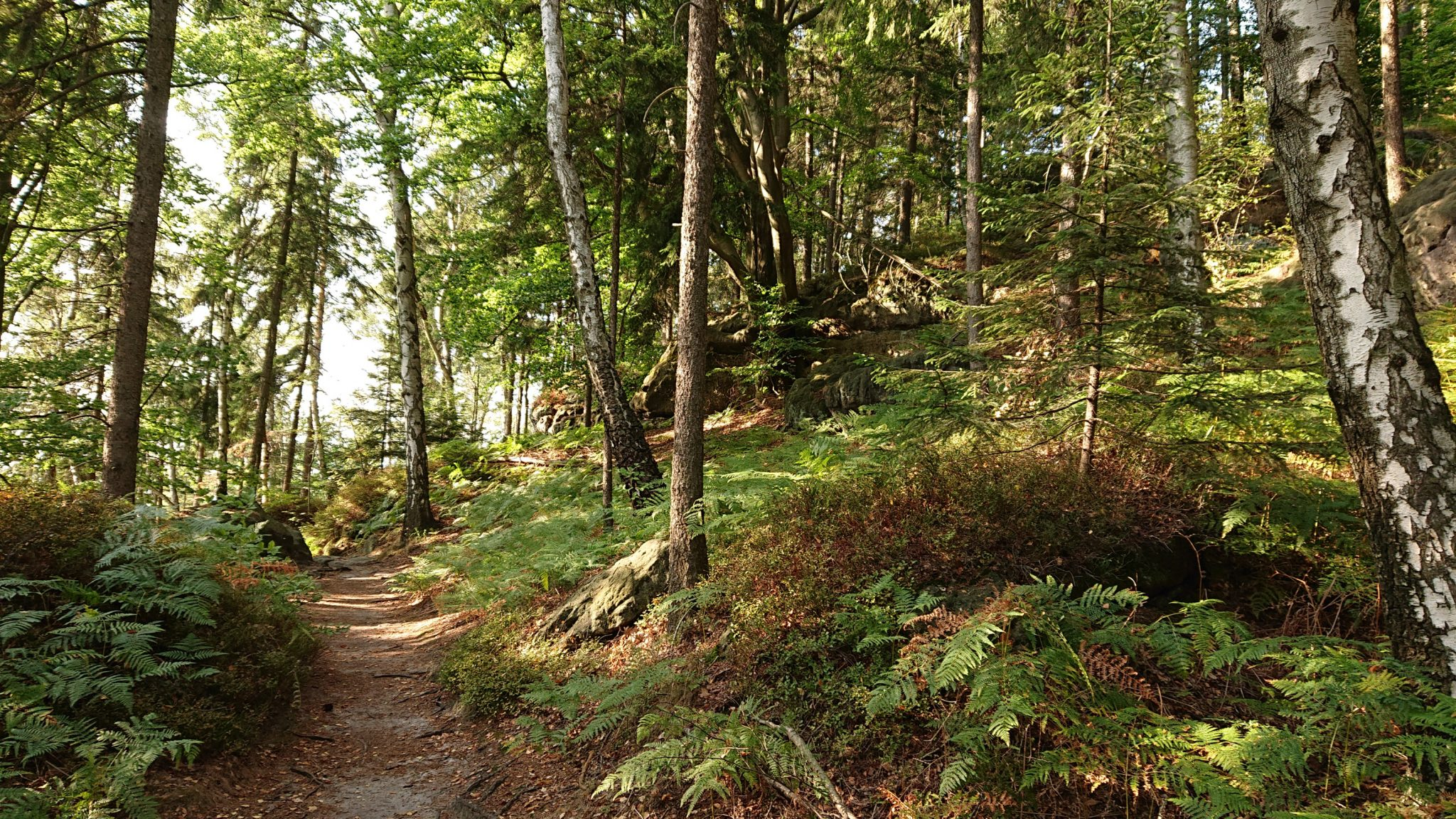 Affensteinweg Frienstein Carolafelsen und Wilde Hölle, Wanderweg im Wanderparadies Sächsische Schweiz mit vielen tollen Aussichten, riesiger Felsennationalpark, schöner Wald mit Farne