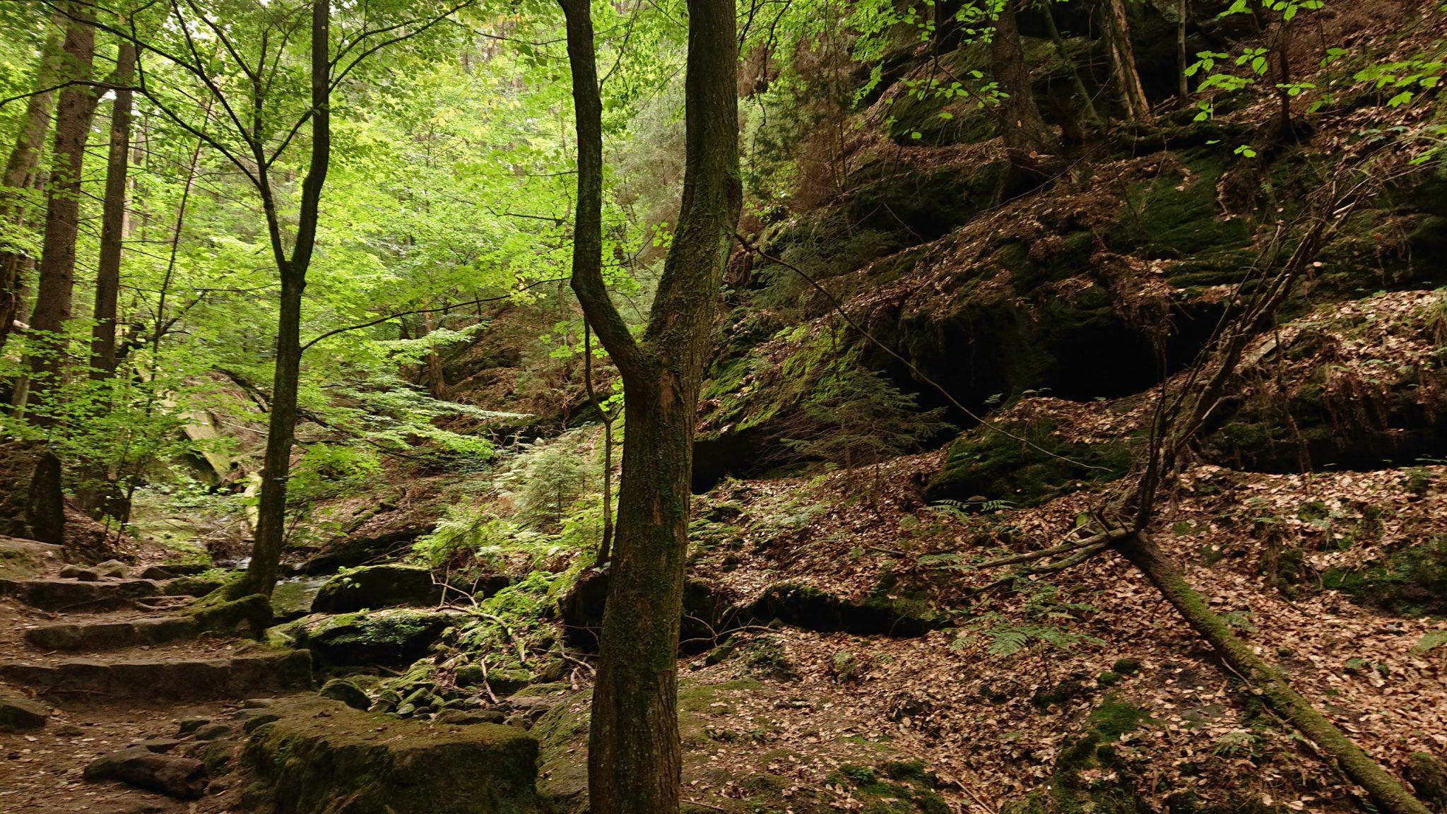 Wanderung durch Polenztal zur Bastei und zu Schwedenlöcher, steiniger Wanderweg beim Polenztal im schönen Wald, große Felsen