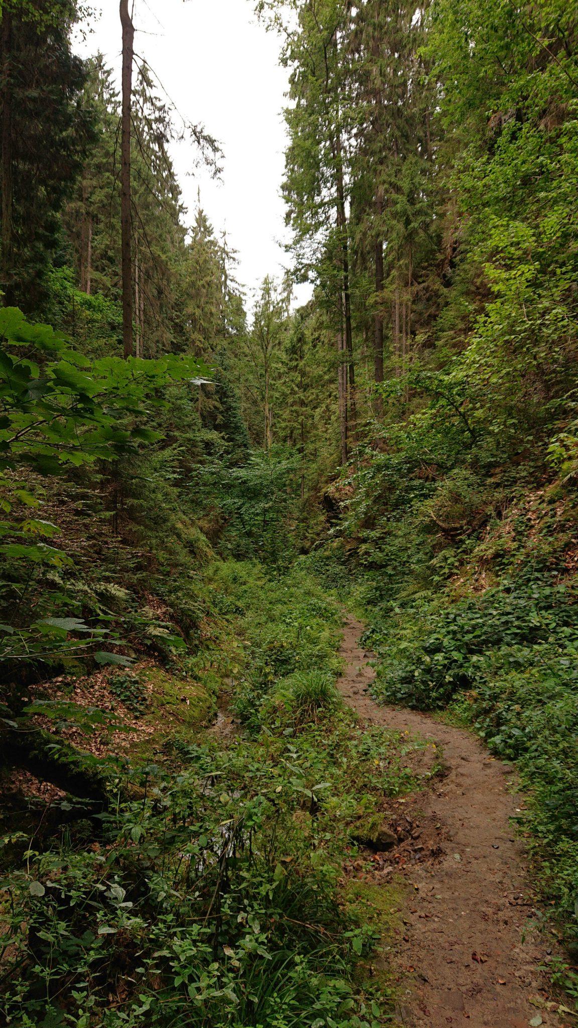 Wanderung durch Polenztal zur Bastei und zu Schwedenlöcher, Wanderweg im Polenztal, saftig grüner Wald, schmaler Pfad