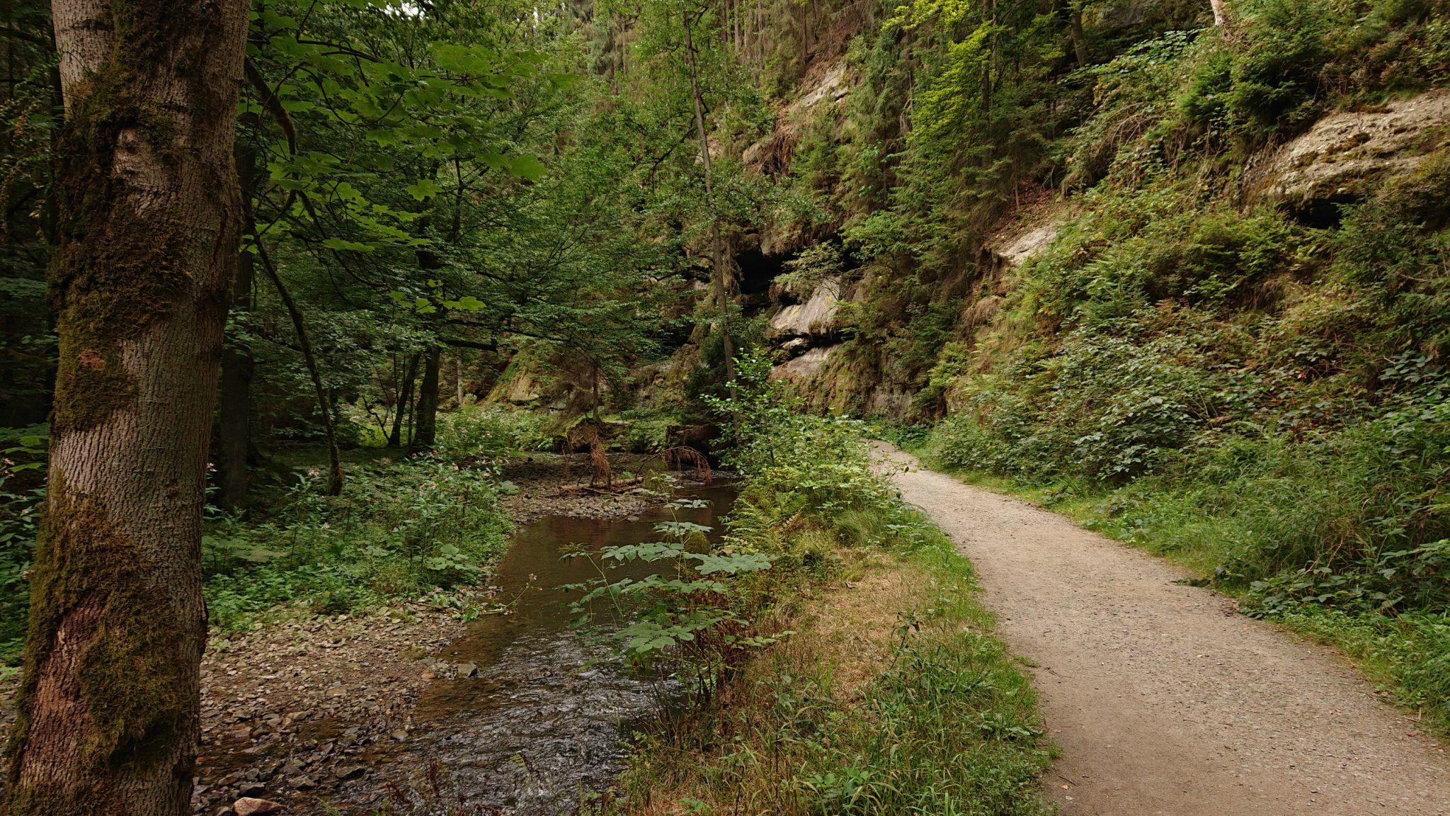 Wanderung durch Polenztal zur Bastei und zu Schwedenlöcher, Wanderweg im Polenztal, saftig grüner Wald, Weg neben Fluß Polenz