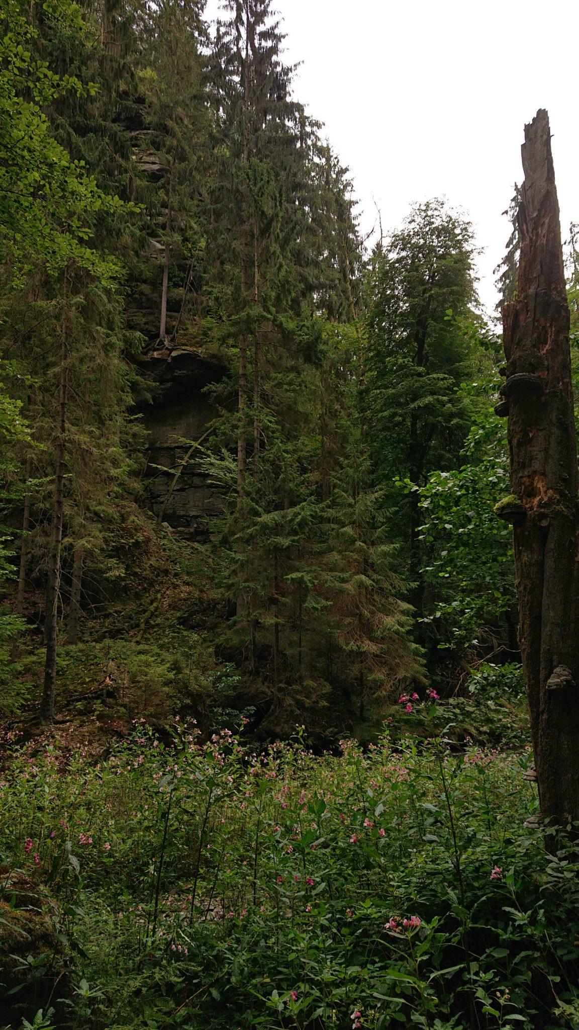 Wanderung durch Polenztal zur Bastei und zu Schwedenlöcher, Wanderweg im Polenztal, saftig grüner Wald, Weg neben Fluß Polenz, Wildblumen wachsen im Tal