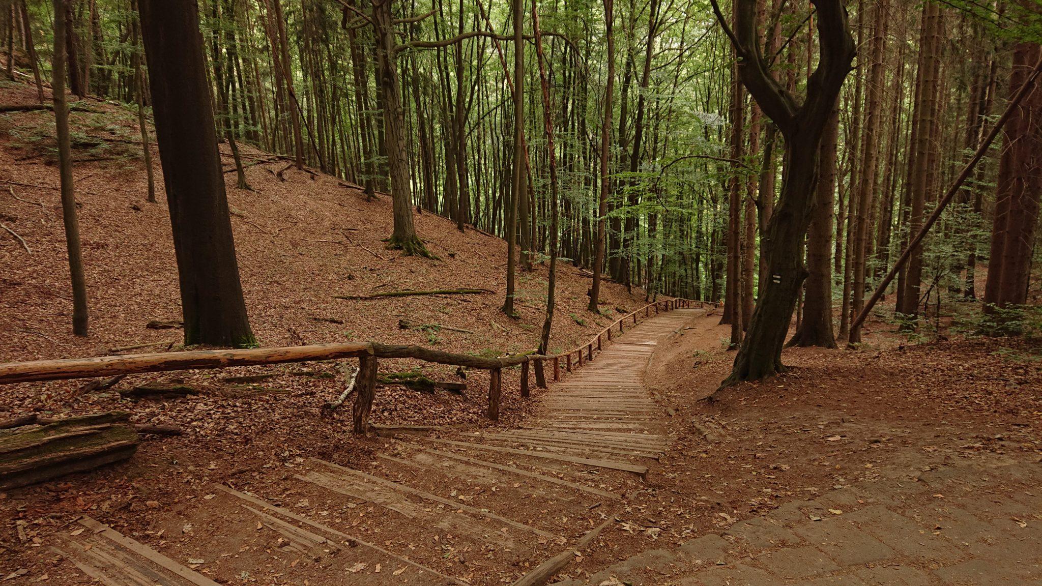 Wanderung durch Polenztal zur Bastei und zu Schwedenlöcher, Wanderweg zur Bastei, viele Treppen durch schönen Wald, weniger Menschen als erwartet sind unterwegs
