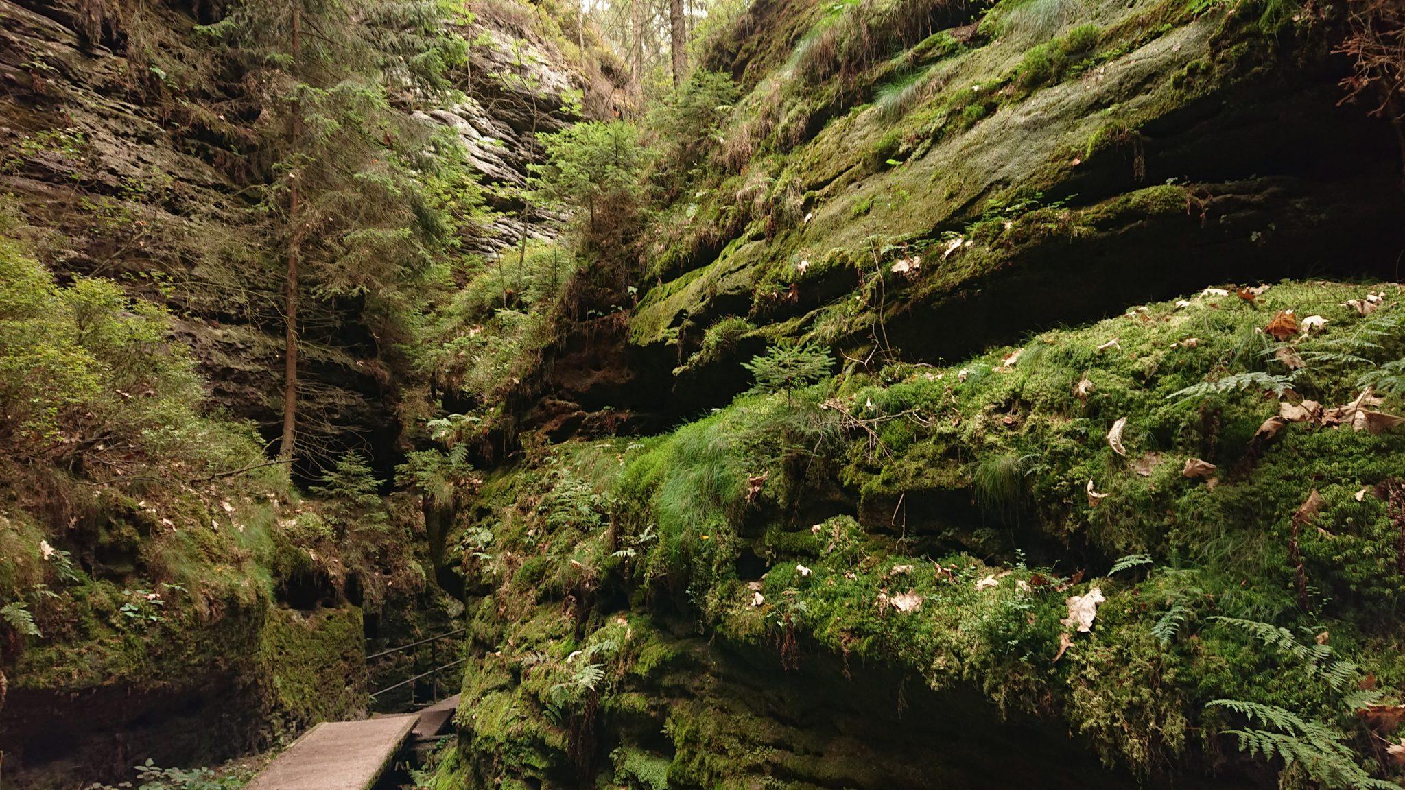 Wanderung durch Polenztal zur Bastei und zu Schwedenlöcher, Wanderweg durch die Schwedenlöcher, schmale Pfade entlang moosbewachsener Felsen