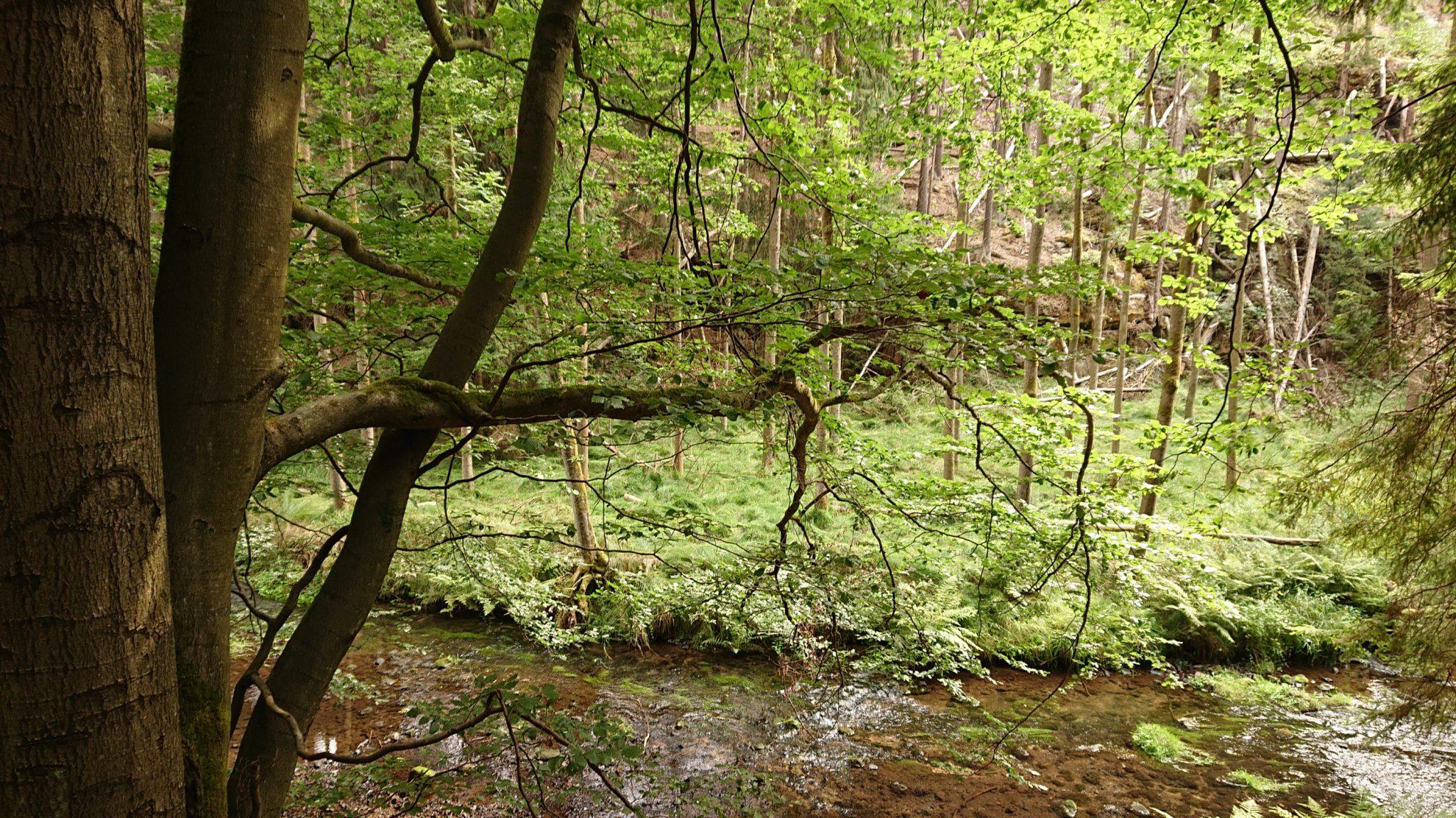 Kirnitzschklamm Hermanseck und Königsplatz im Kirnitzschtal wandern, Wanderweg im Wanderparadies Sächsische Schweiz mit vielen tollen Aussichten, riesiger Felsennationalpark, Bach fließt durch Nationalpark in die Kirnitzsch