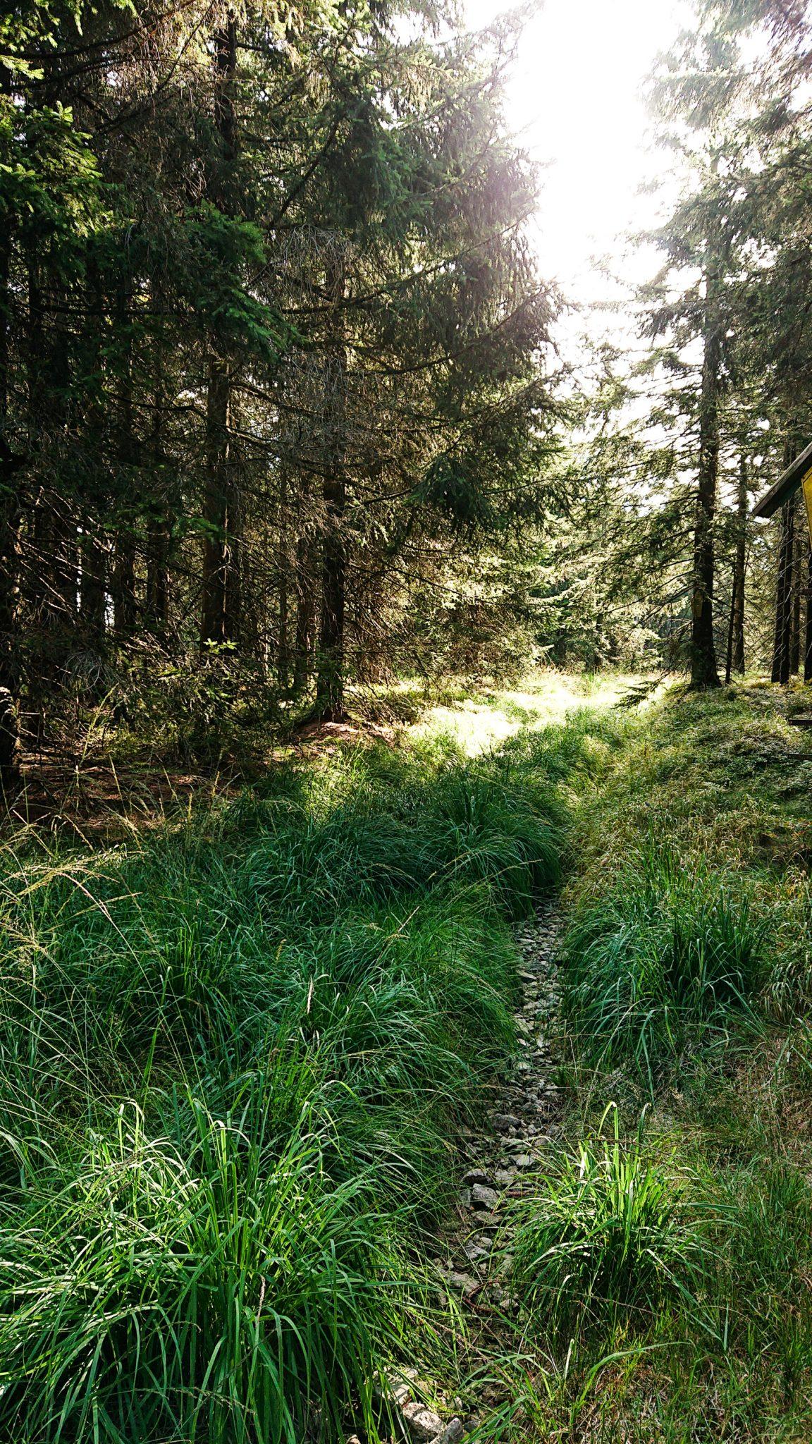 Großer Beerberg Schneekopf und Teufelskanzel, Gipfeltour Wanderung im Thüringer Wald, sehr schmaler Pfad durch schönen Wald, saftig grüne Wiese
