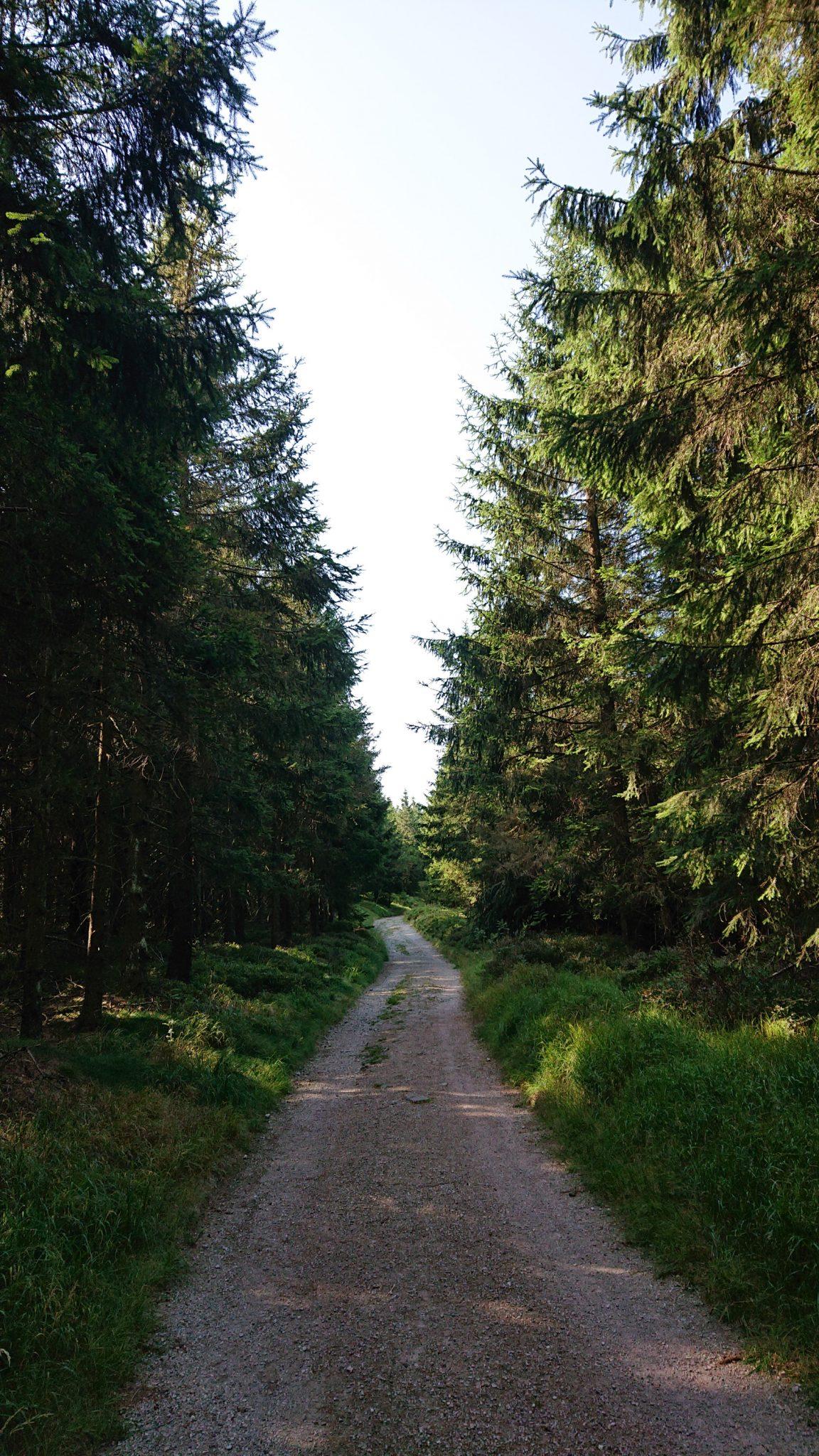 Großer Beerberg Schneekopf und Teufelskanzel, Gipfeltour Wanderung im Thüringer Wald, Weg umringt von meist Nadelbäumen