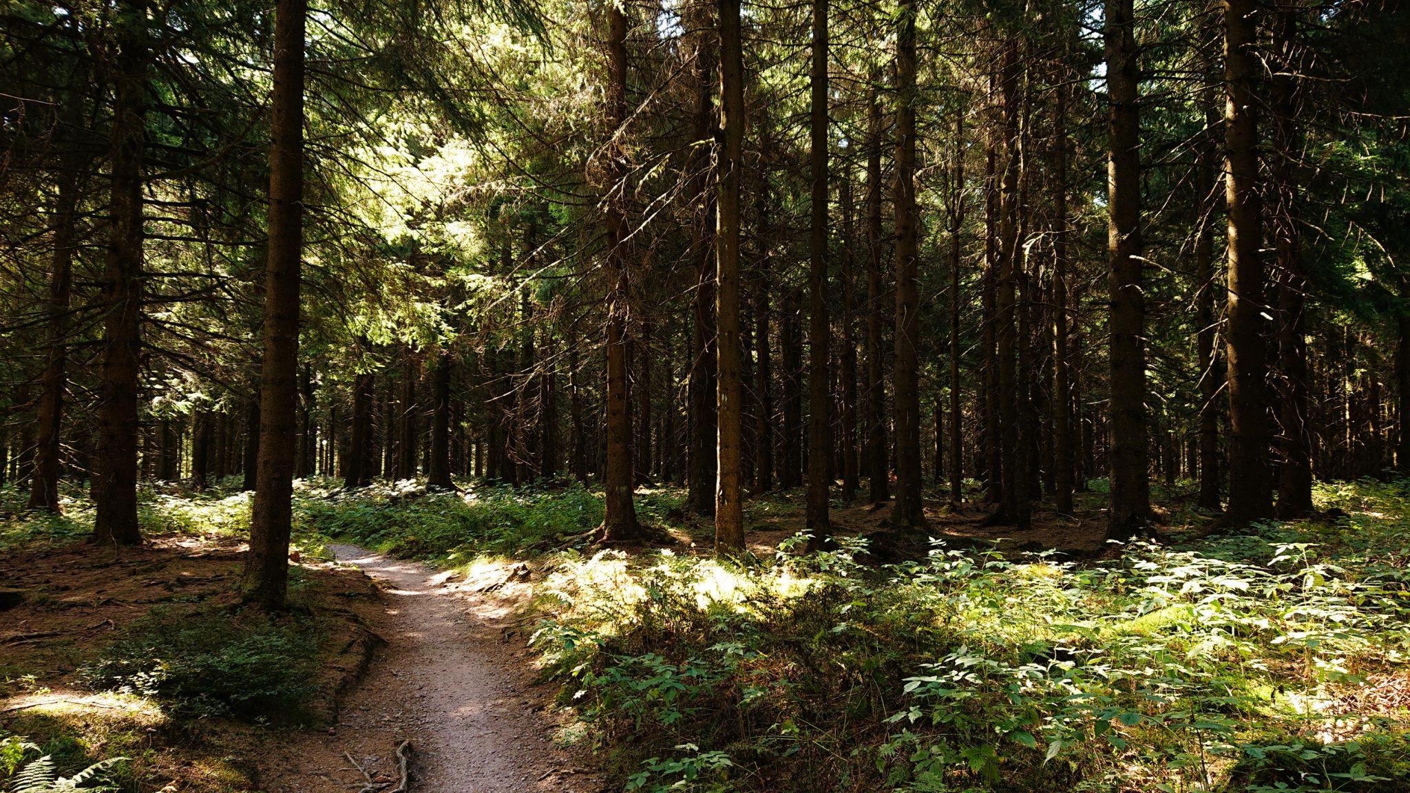 Großer Beerberg Schneekopf und Teufelskanzel, Gipfeltour Wanderung im Thüringer Wald, schöner Wanderweg durch Wald