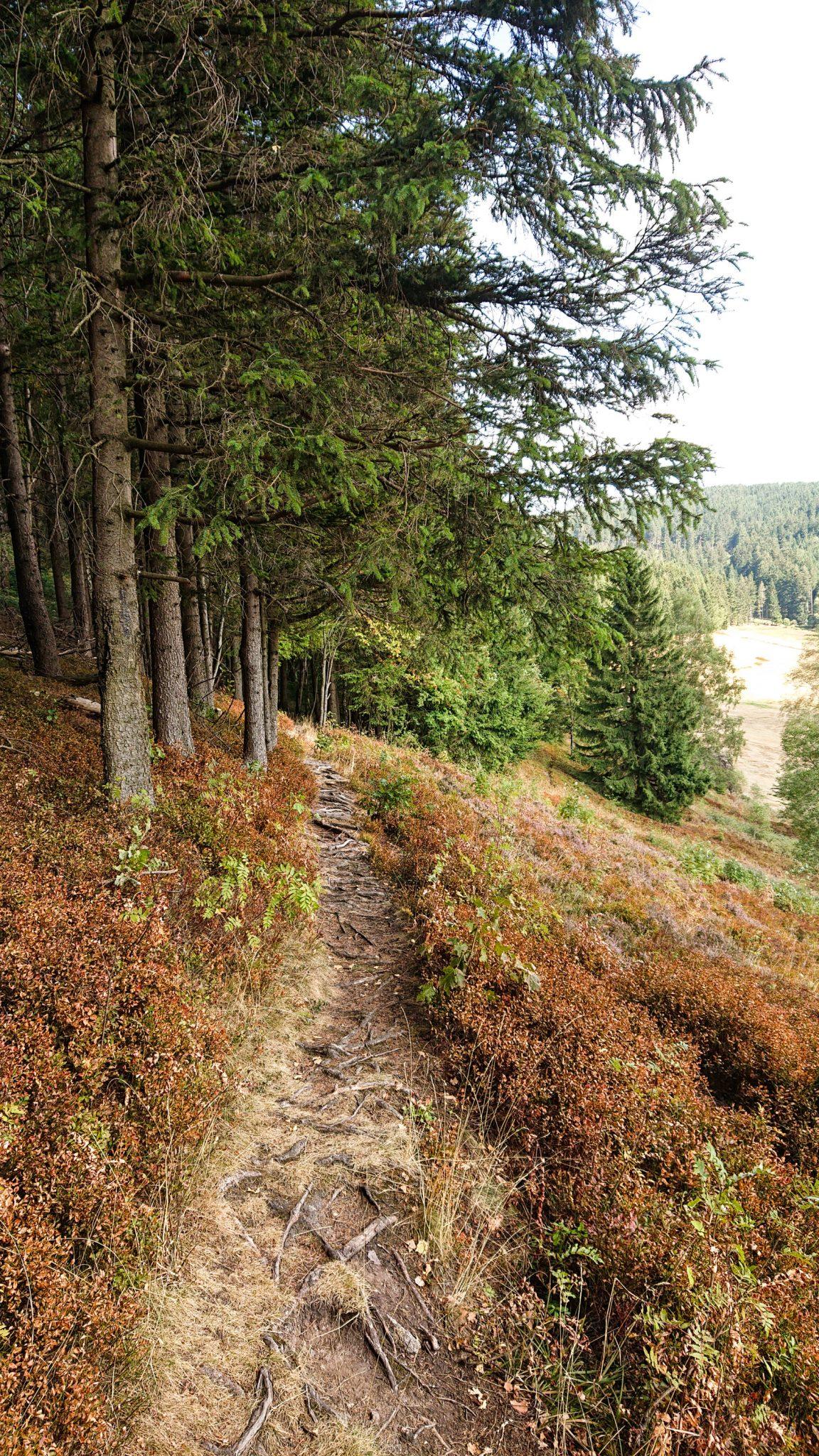 Großer Beerberg Schneekopf und Teufelskanzel, Gipfeltour Wanderung im Thüringer Wald, schmaler Pfad am Waldesrand