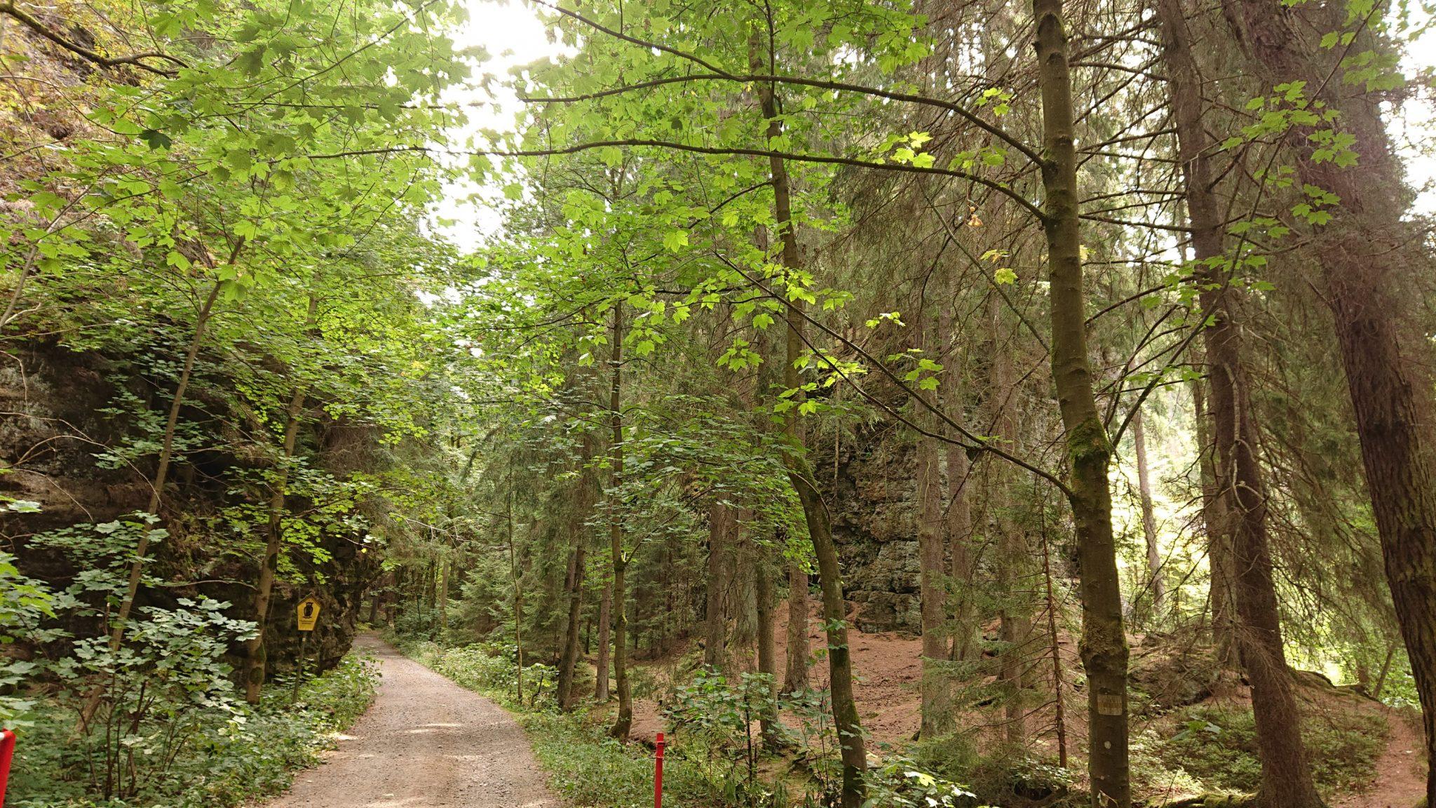 Marderschlucht wandern bei Tambach-Dietharz, schöner Wanderweg durch Wald entlang Marderbach und Tal