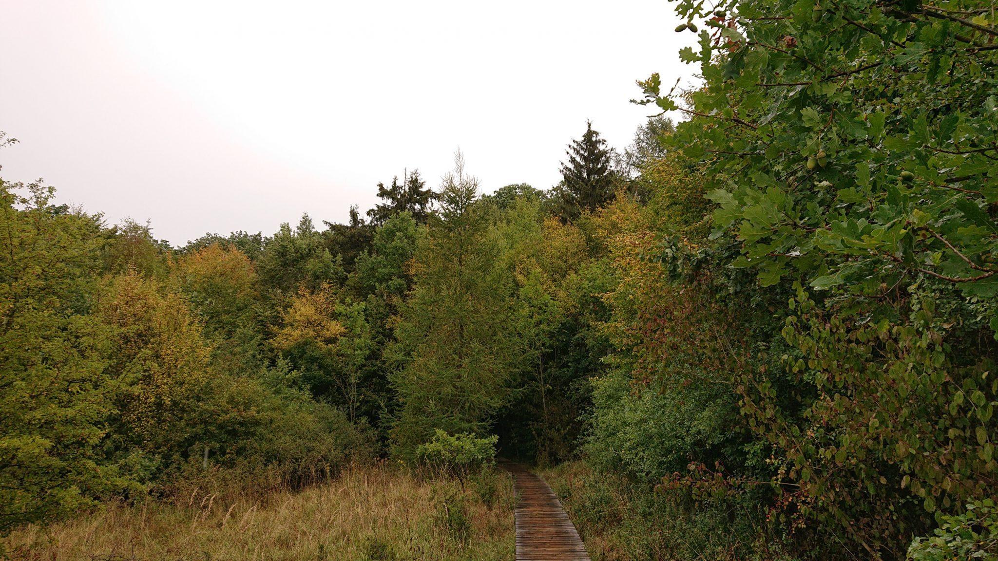 Nationalpark Hainich Saugrabenweg und Betteleichenweg wandern, dichter, ursprünglicher Buchenwald